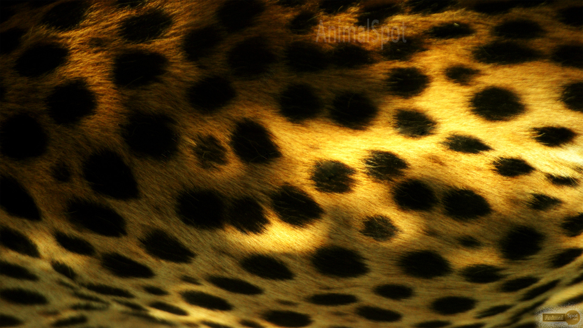 Wallpapers Of Cheetah 72 Images HD Wallpapers Download Free Images Wallpaper [1000image.com]