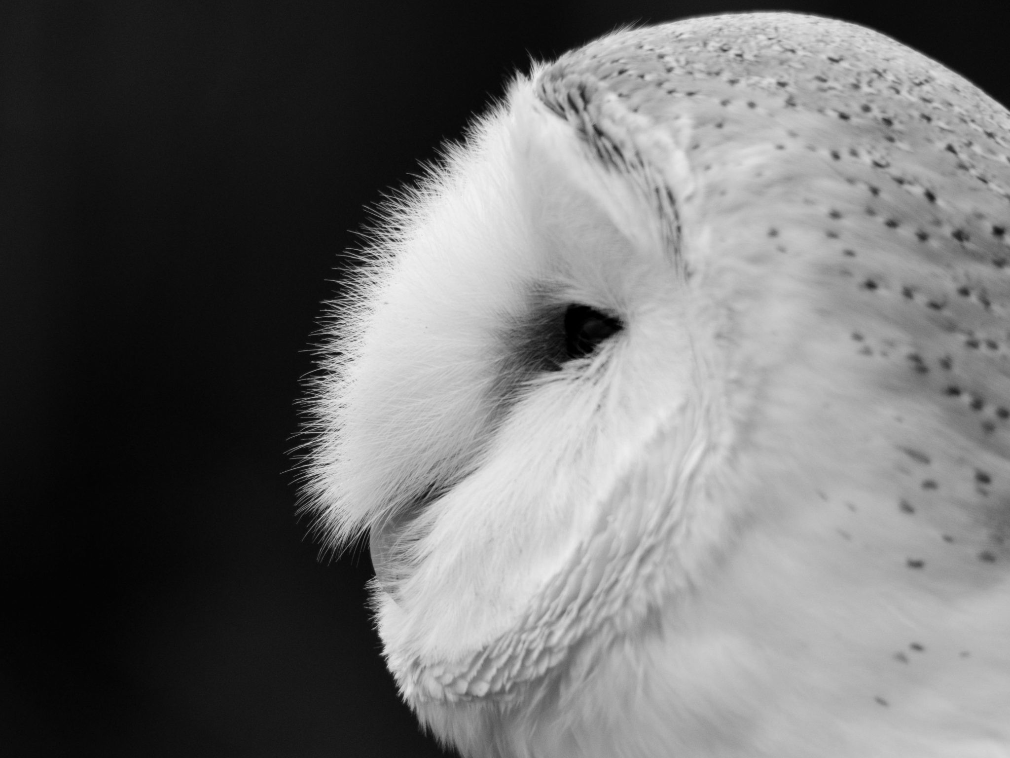 1920x1080 3D Black And White Owl   HD Animals and Birds Wallpaper Free Download .