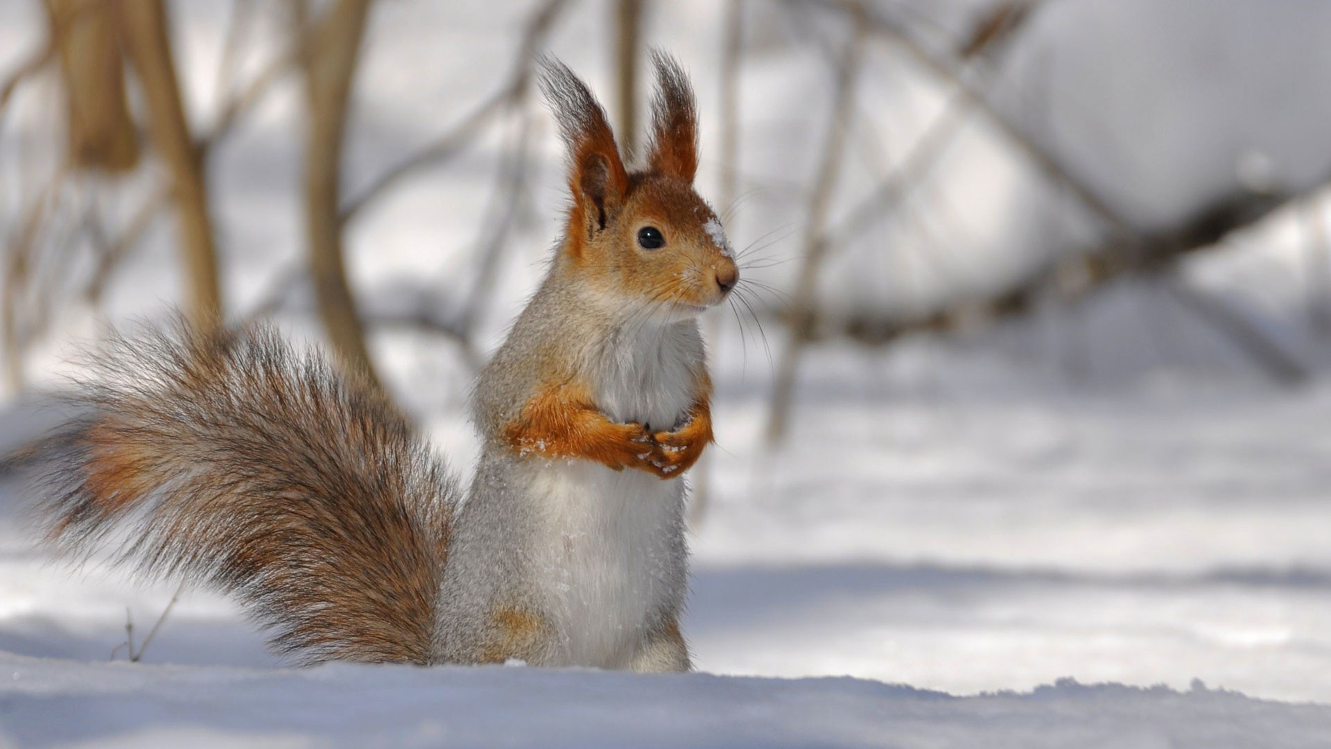 Winter animals wallpaper