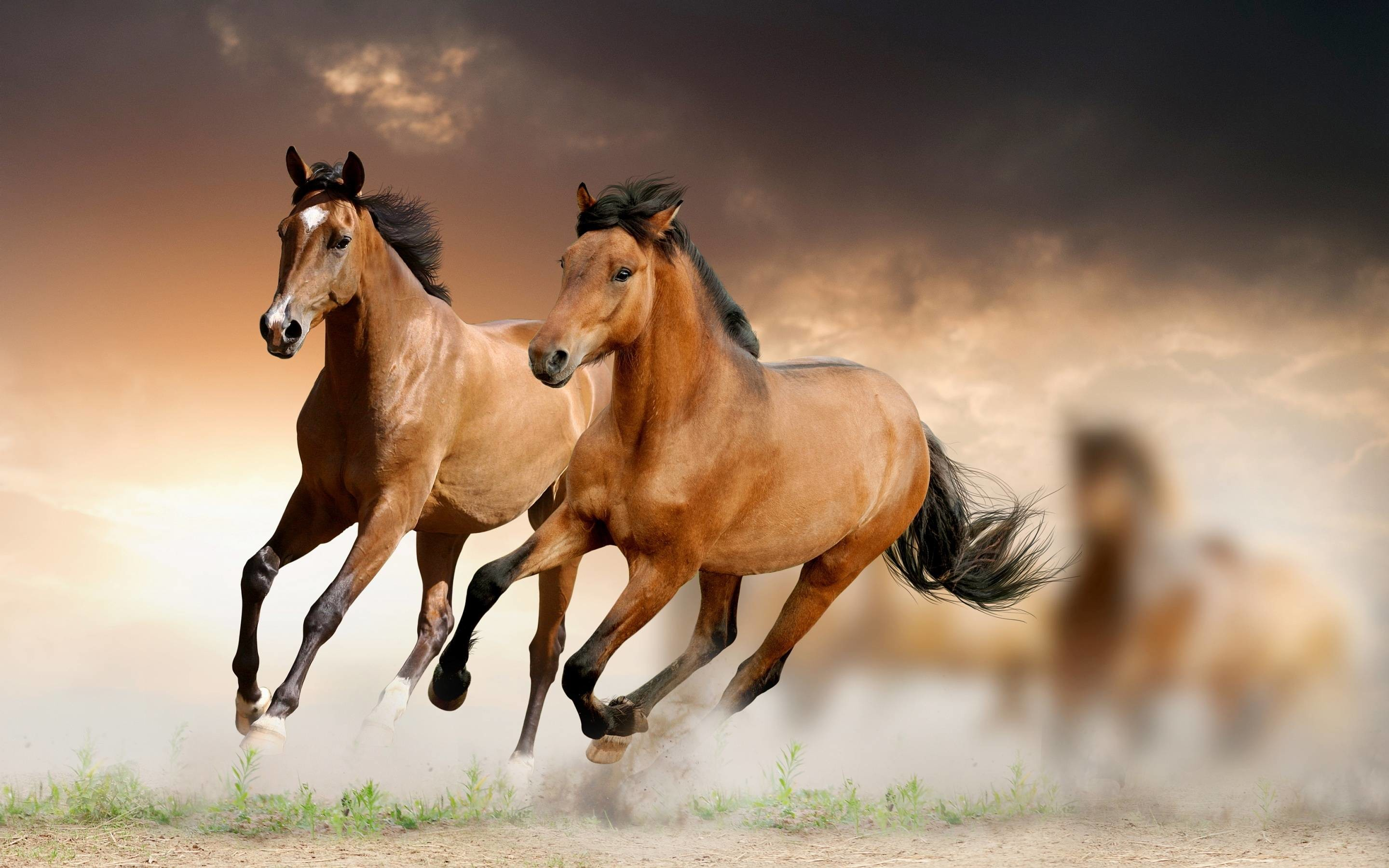 Running Horses Wallpaper (63+ images) - photo#6