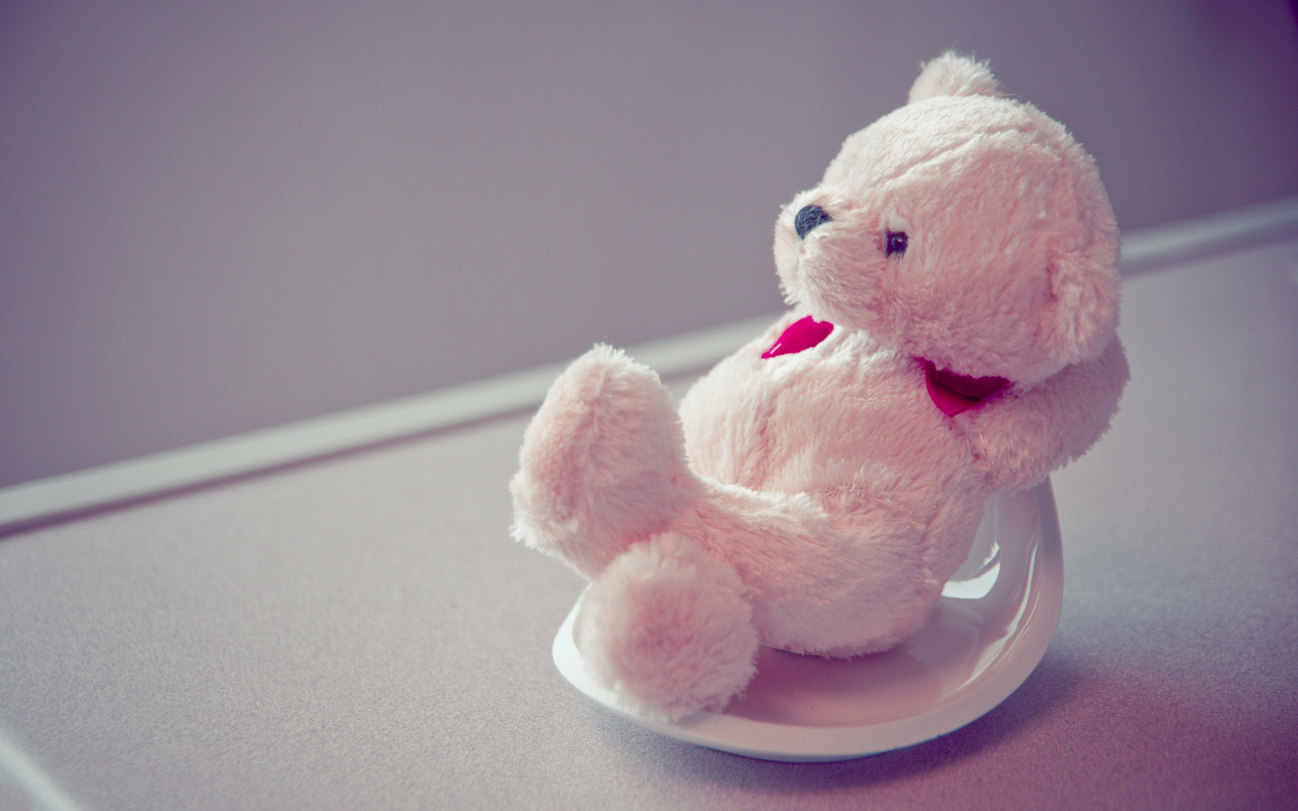 2560x1600 The most relaxed teddy i've ever seen so cute