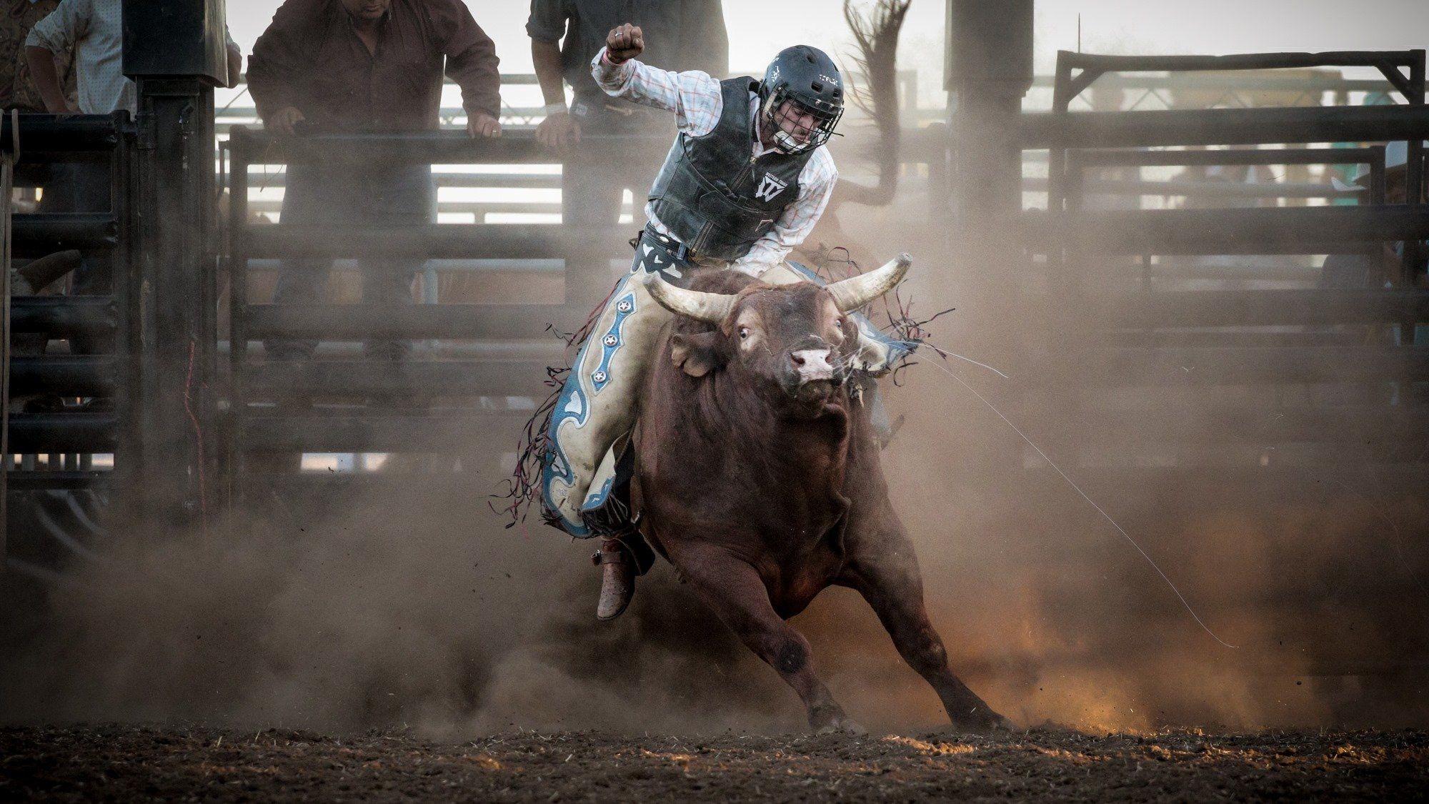 Image Result For Bull Riding Wallpapers Hd Pixelstalk Net