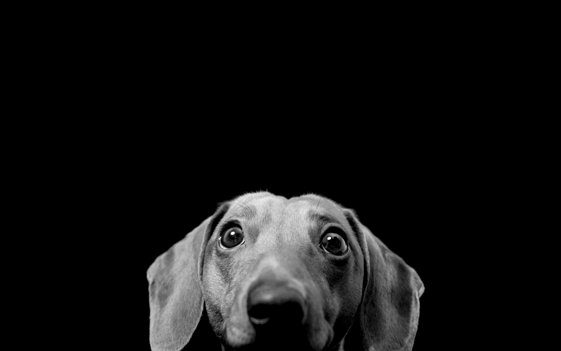 1920x1200 Black And White Dog Wallpaper Mobile