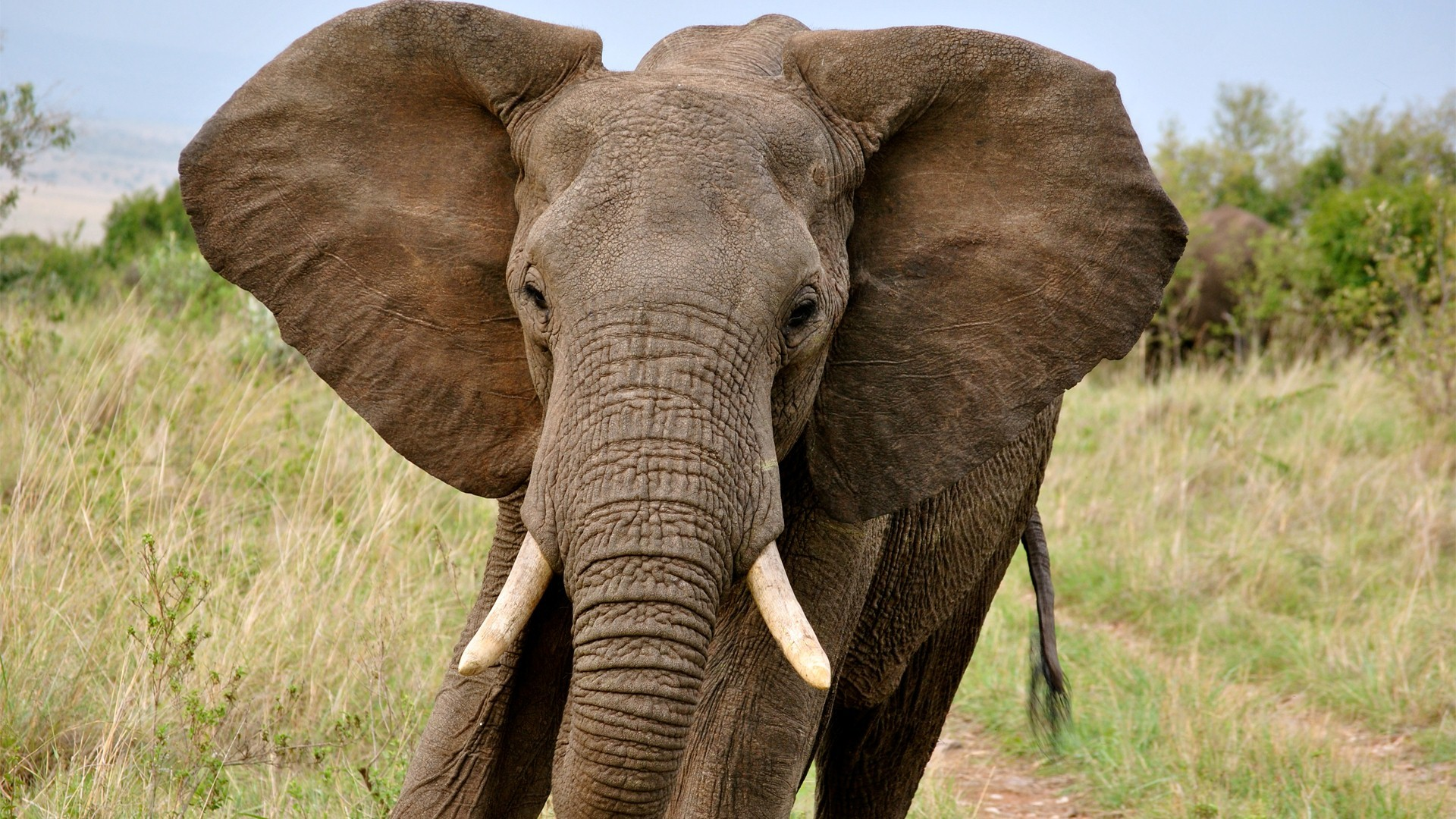 Elephant Screensavers and Wallpaper (69+ images)