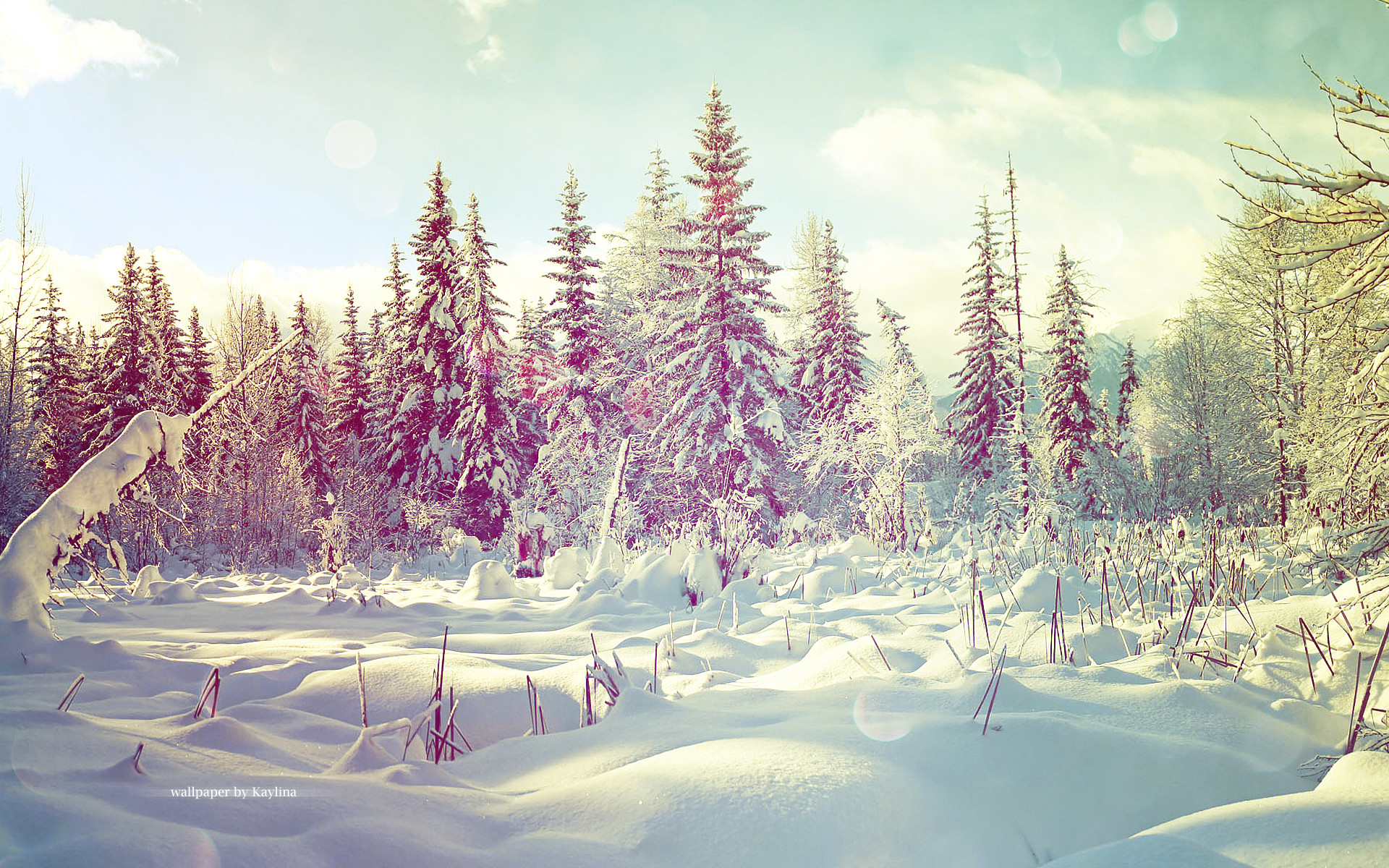 1920x1200 Winter Wonderland wallpaper
