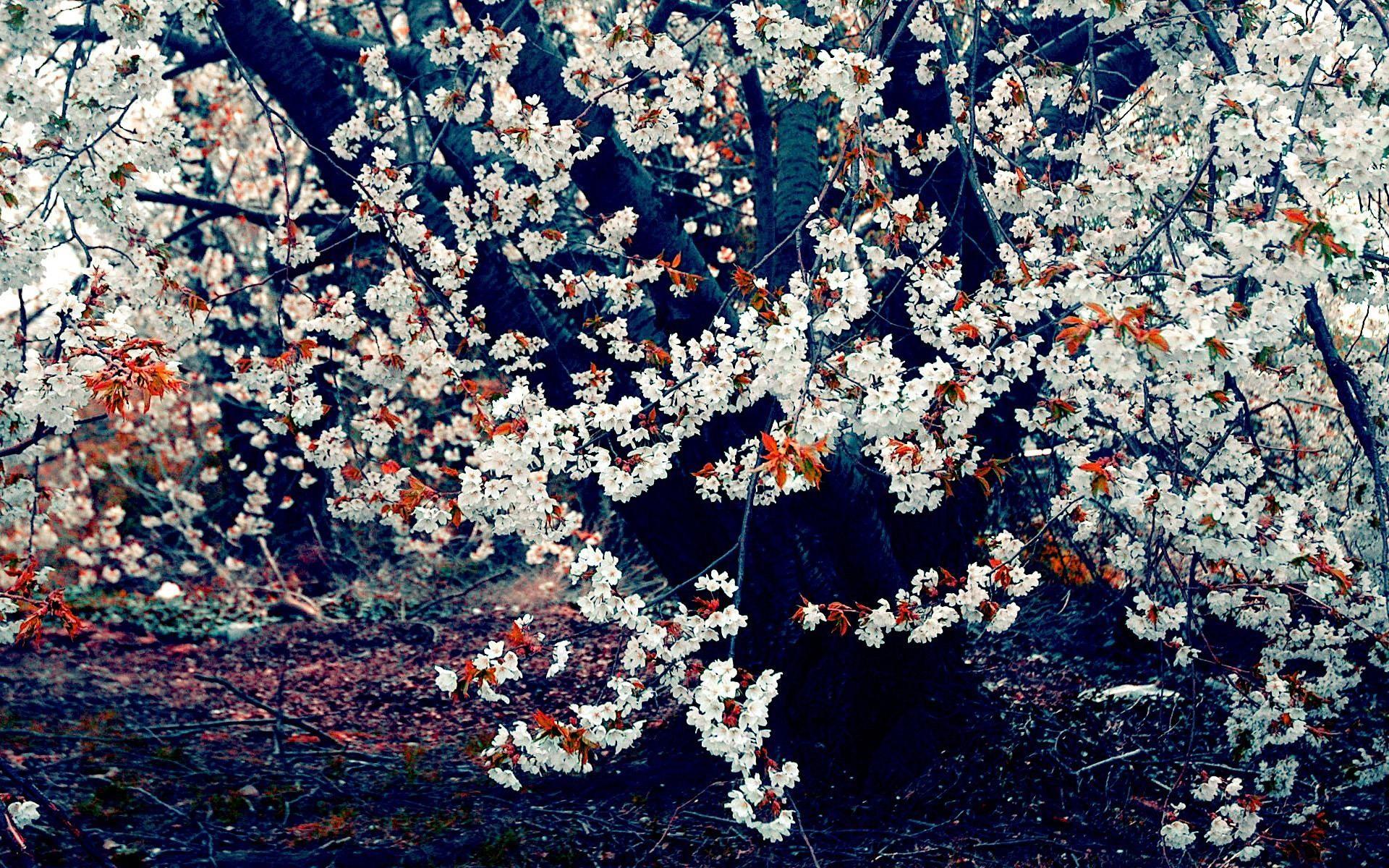 Good Wallpaper Night Cherry Blossom - 508092  Graphic.jpg