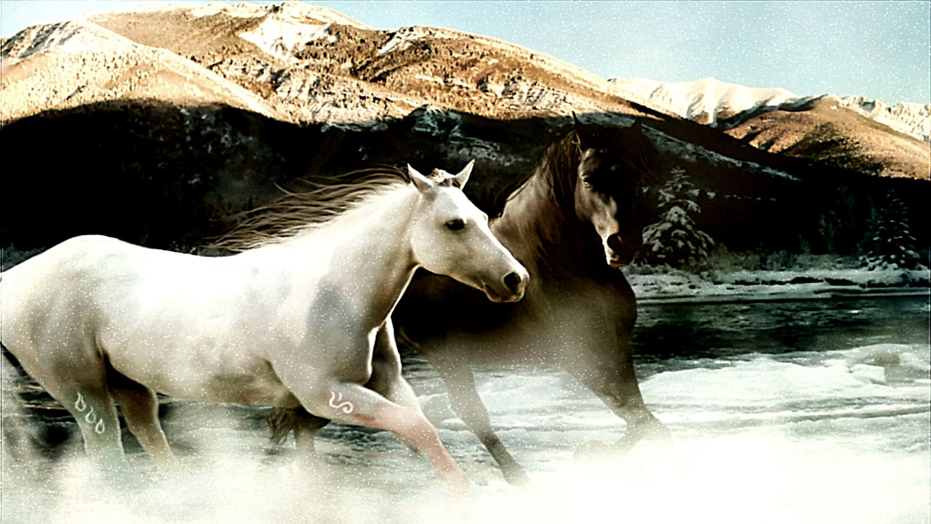 1920x1080 Appaloosa Horse Wallpapers Pacific Northwest