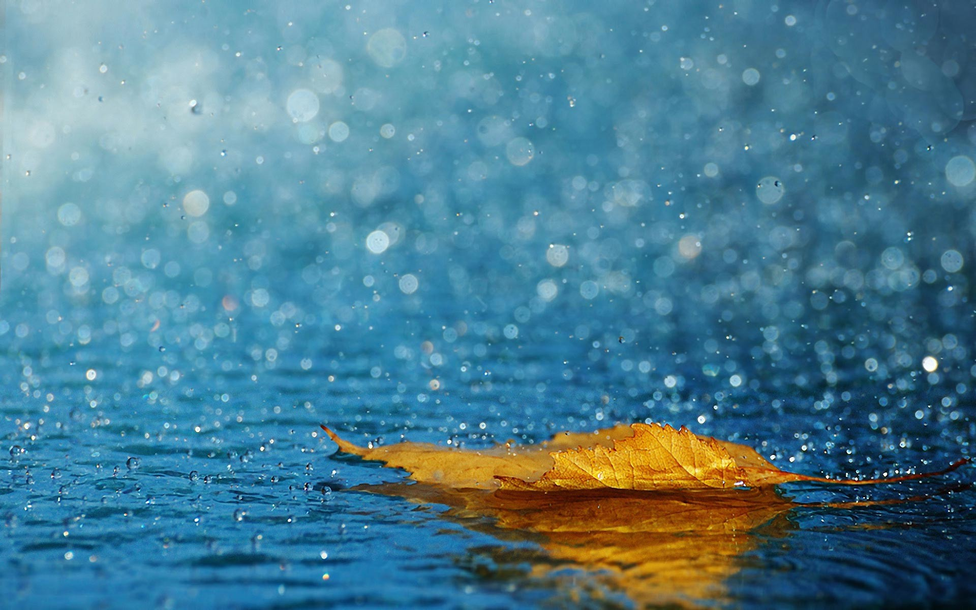 1920x1200 Beautiful Rain Wallpapers Free Download ...
