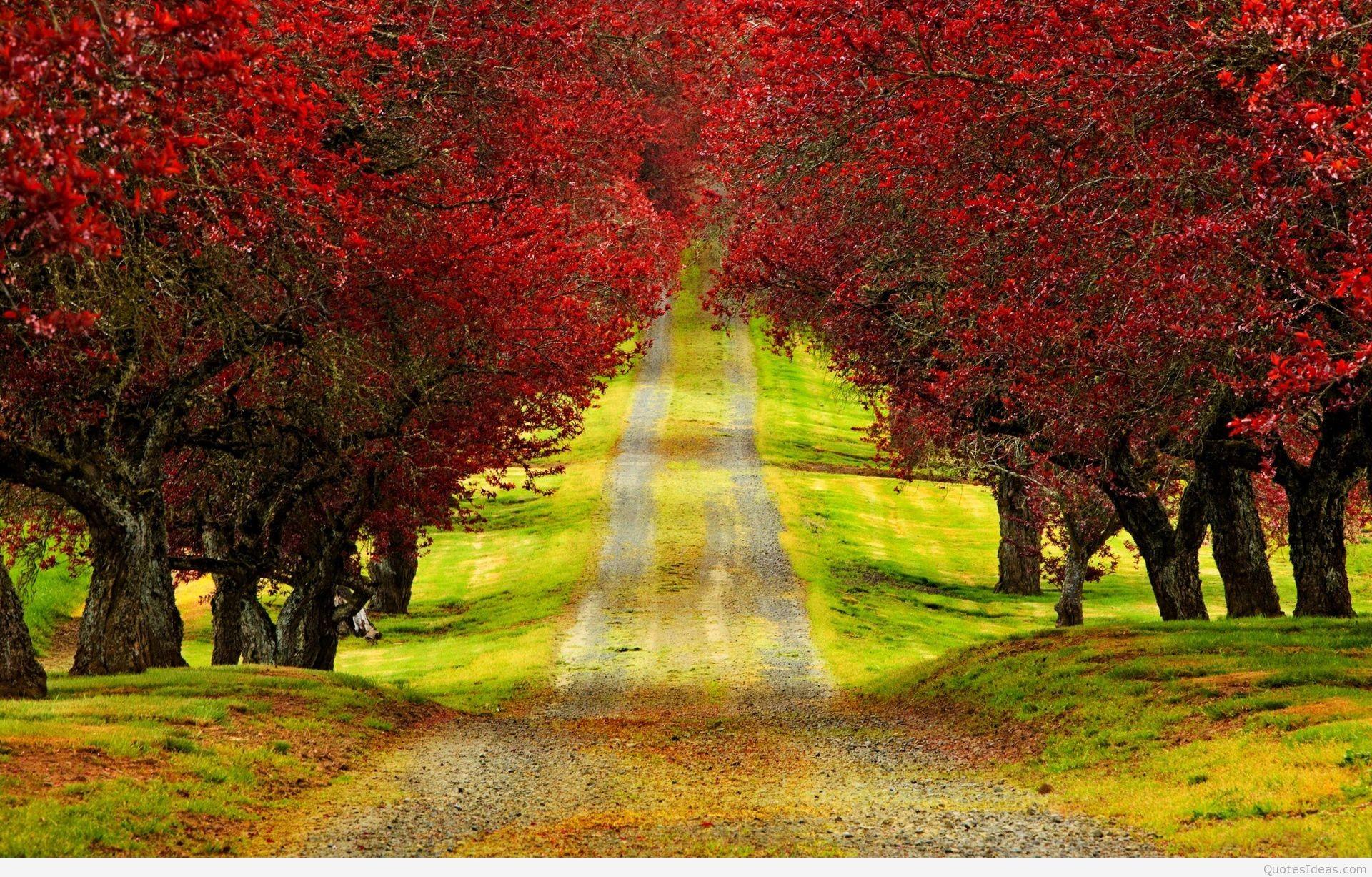 1920x1200 Autumn Wallpaper Hd Widescreen 31 54310 Desktop Wallpapers