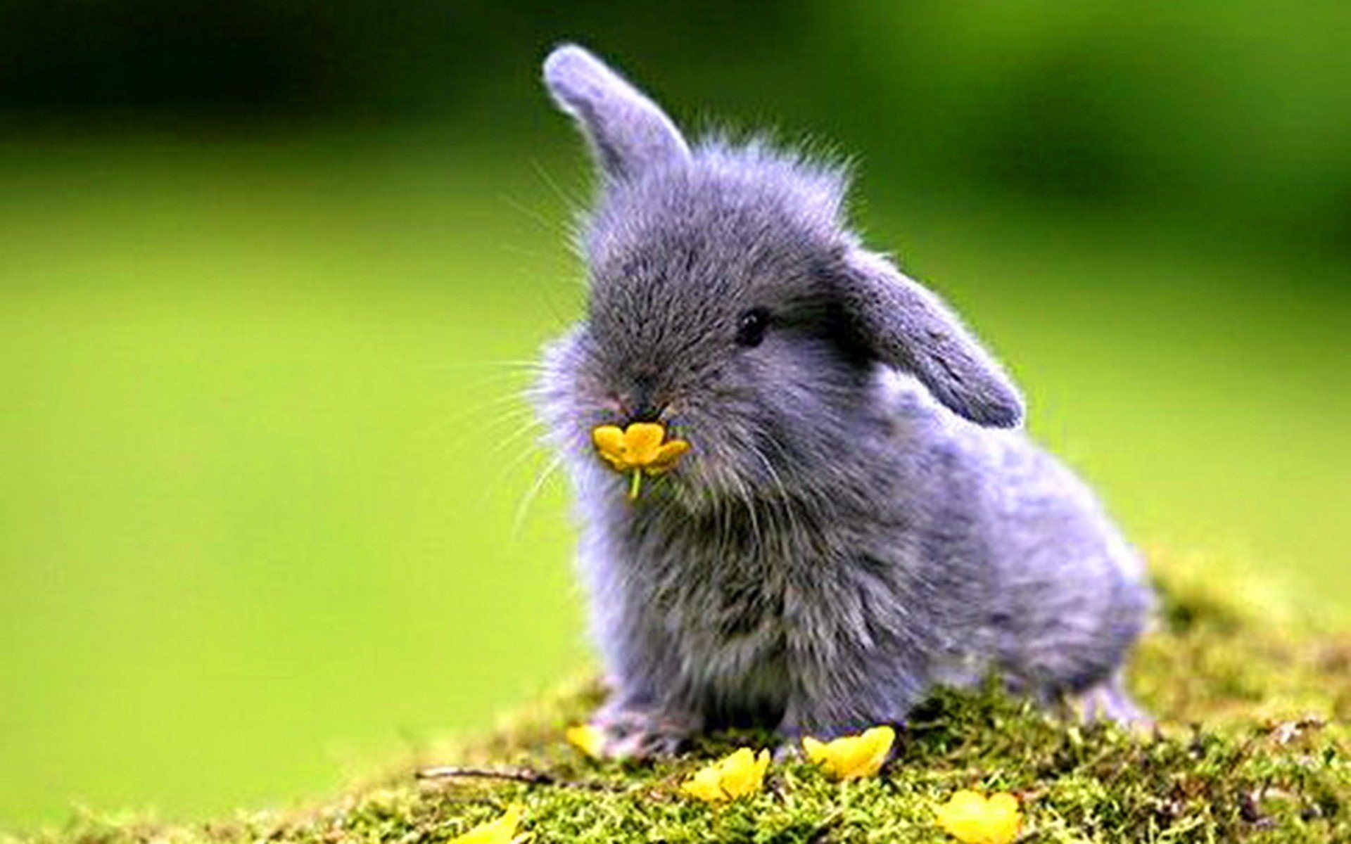 Cute spring animal backgrounds