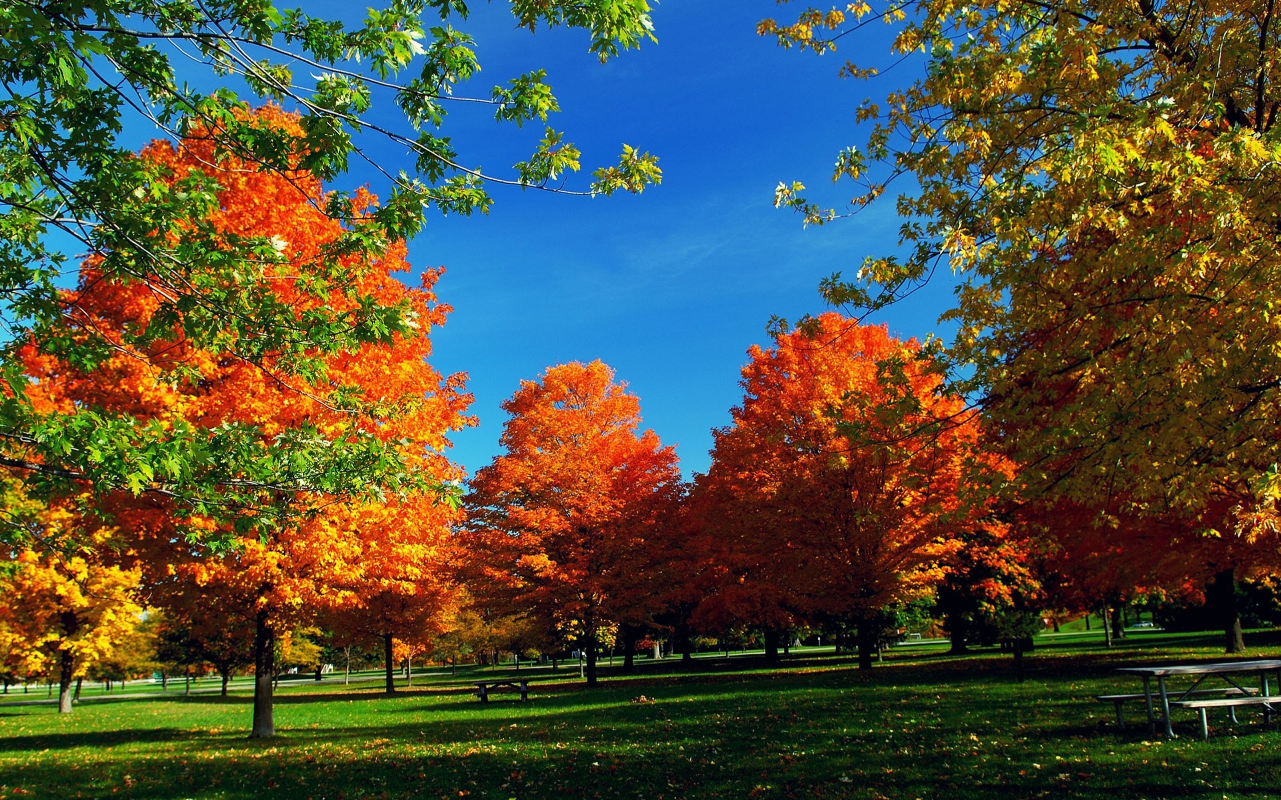 autumn hd widescreen wallpaper (71+ images)