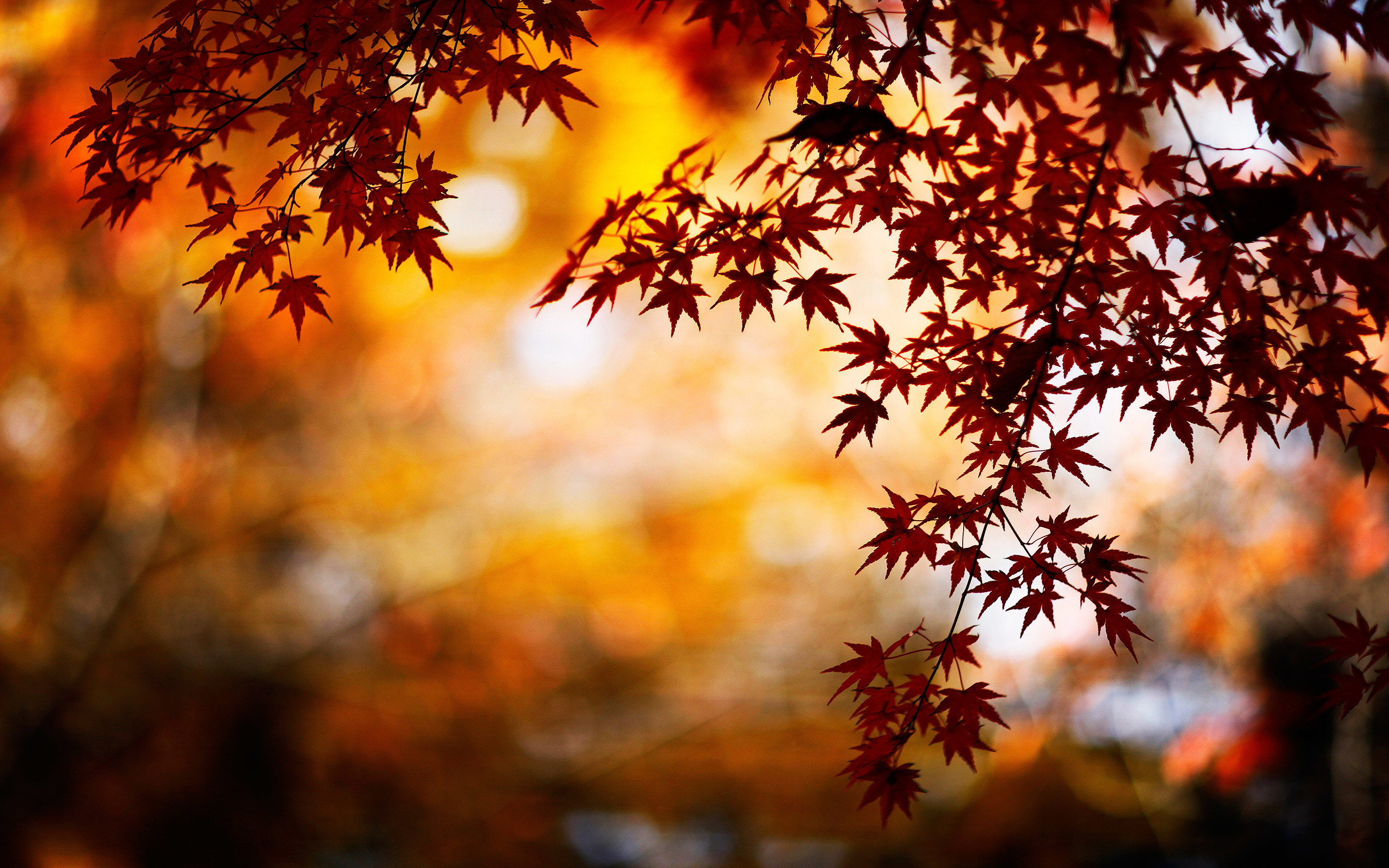 2880x1800 Autumn Leaves Wallpaper Desktop Background Autumn Leaves Spring .