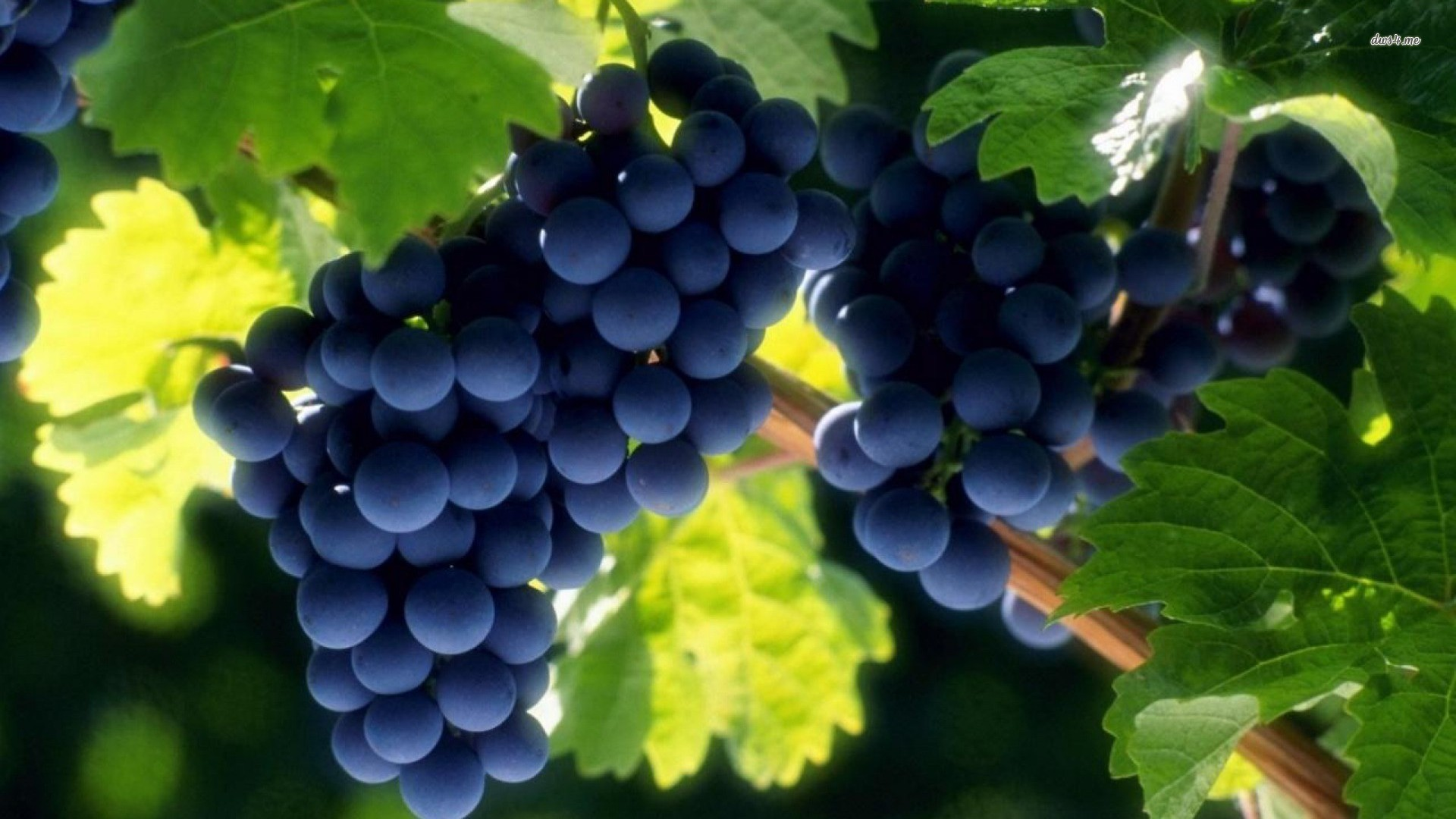 1920x1080 18379-grapes--photography-wallpaper