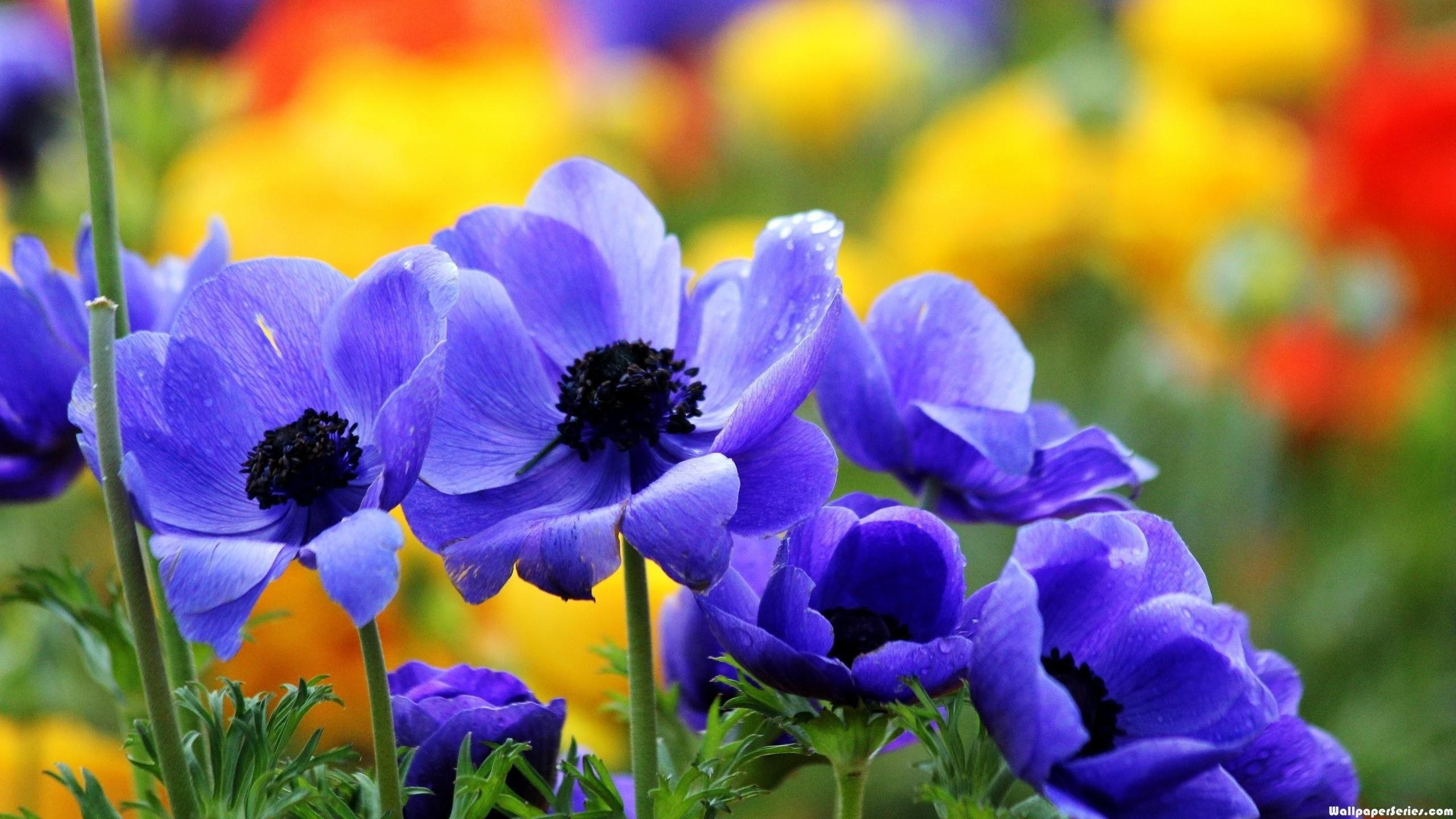 2560x1440 Pretty Flower Backgrounds ...