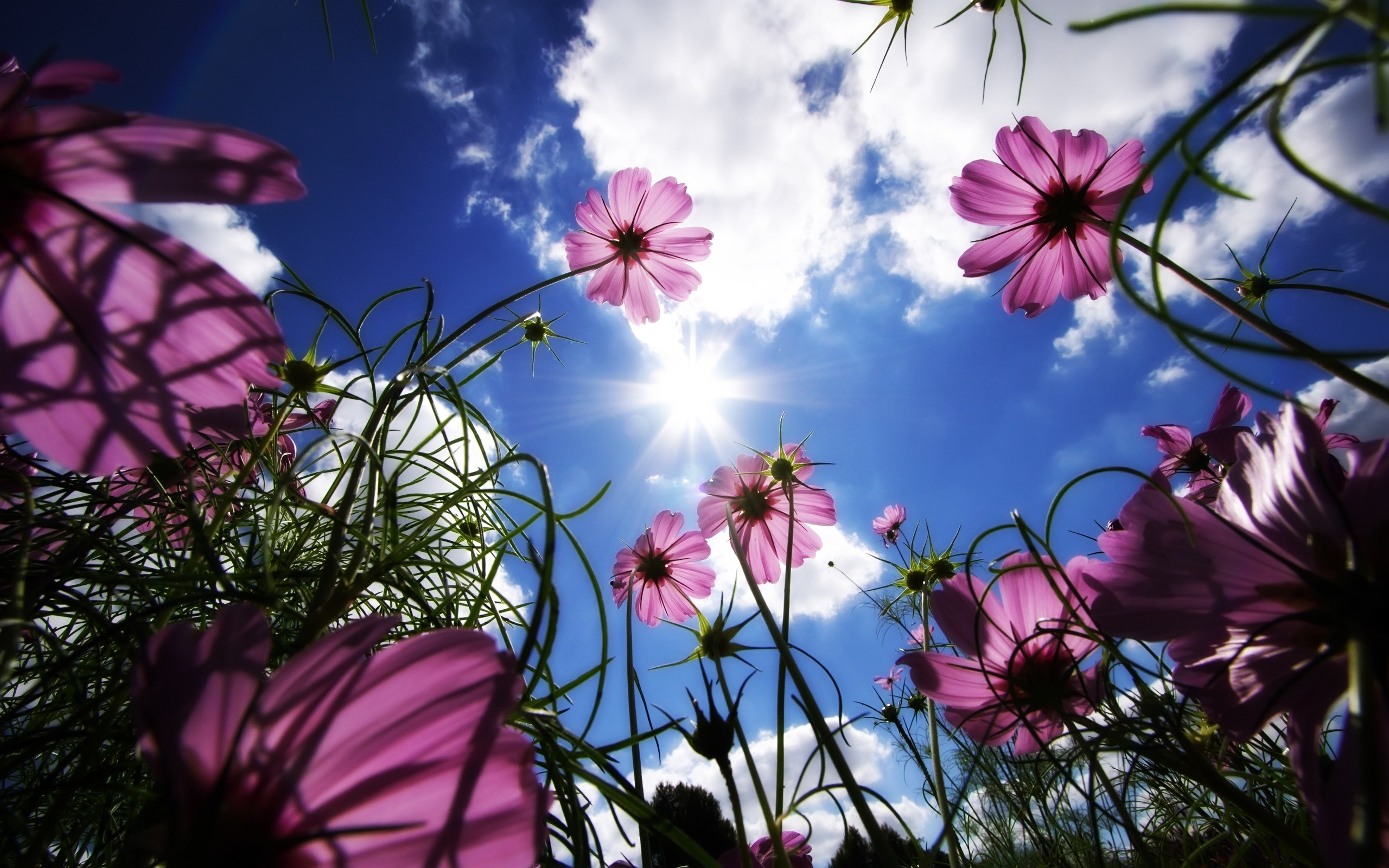 flowers wallpaper (64+ images)