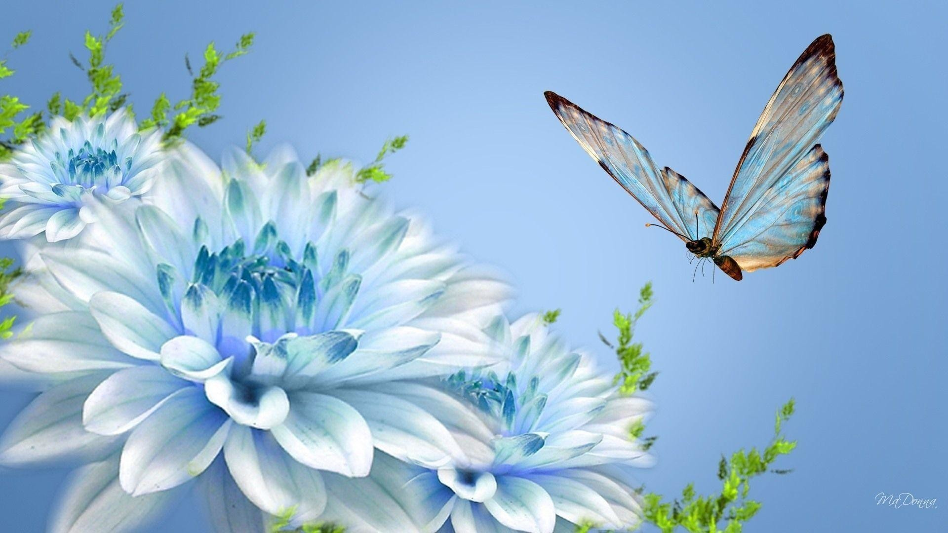 Butterfly And Flower Wallpaper 68 Images