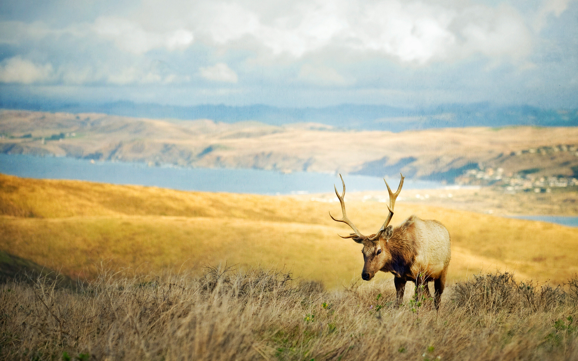 Wild deer pictures wallpaper 54 images - Elk hunting wallpaper ...