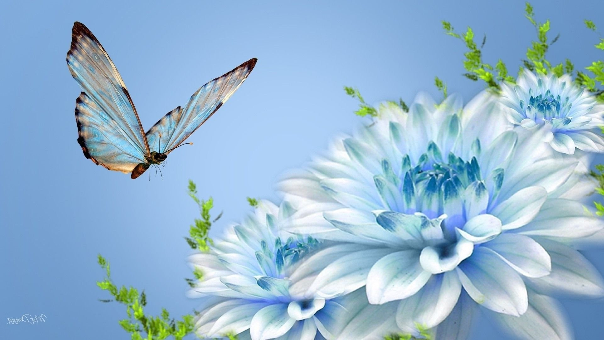 Beautiful butterflies and flowers wallpapers 56 images 1920x1080 butterfly wallpaper izmirmasajfo