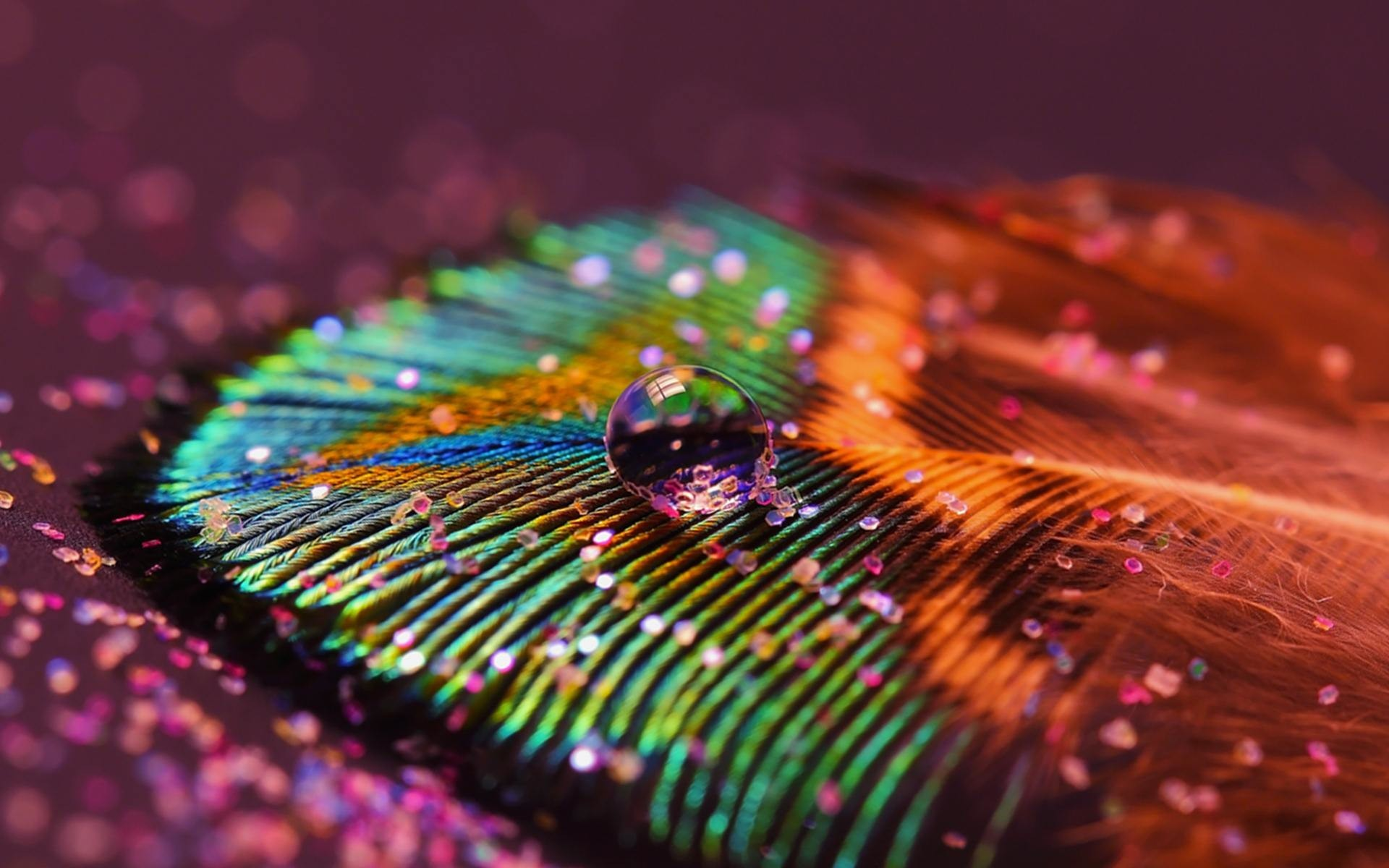 1920x1200  Beautiful Peacock Feather Images | HD Wallpapers Images