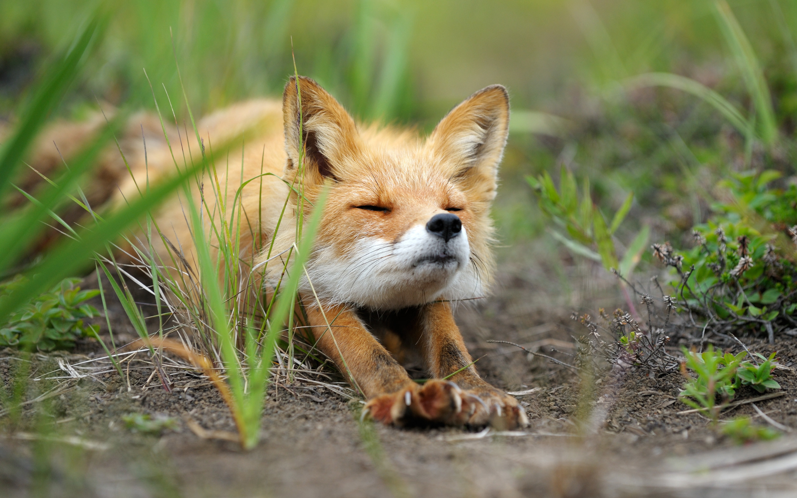 Cute Baby Fox Wallpaper 54 Images