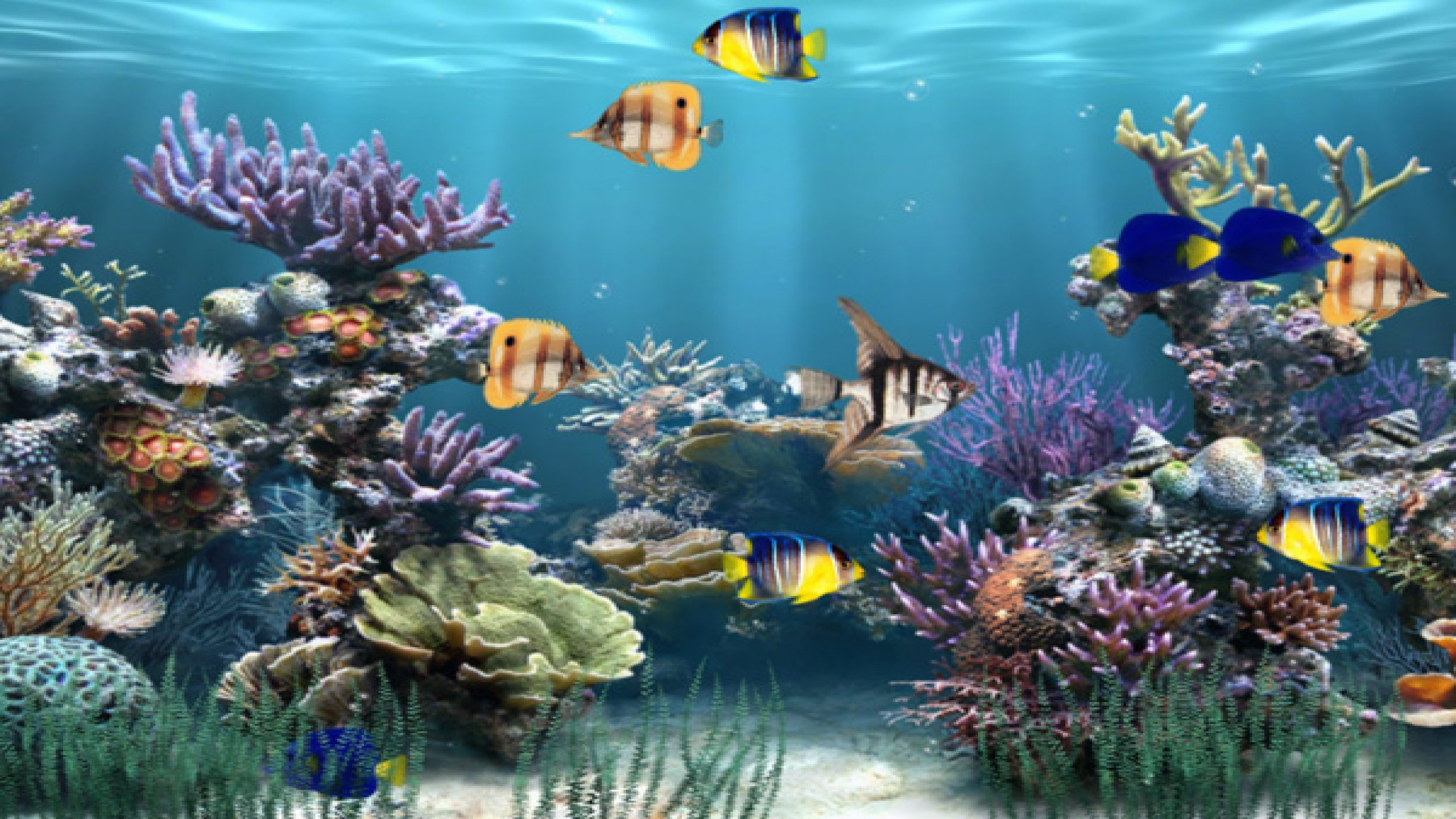Moving Fish Wallpaper 57 Images