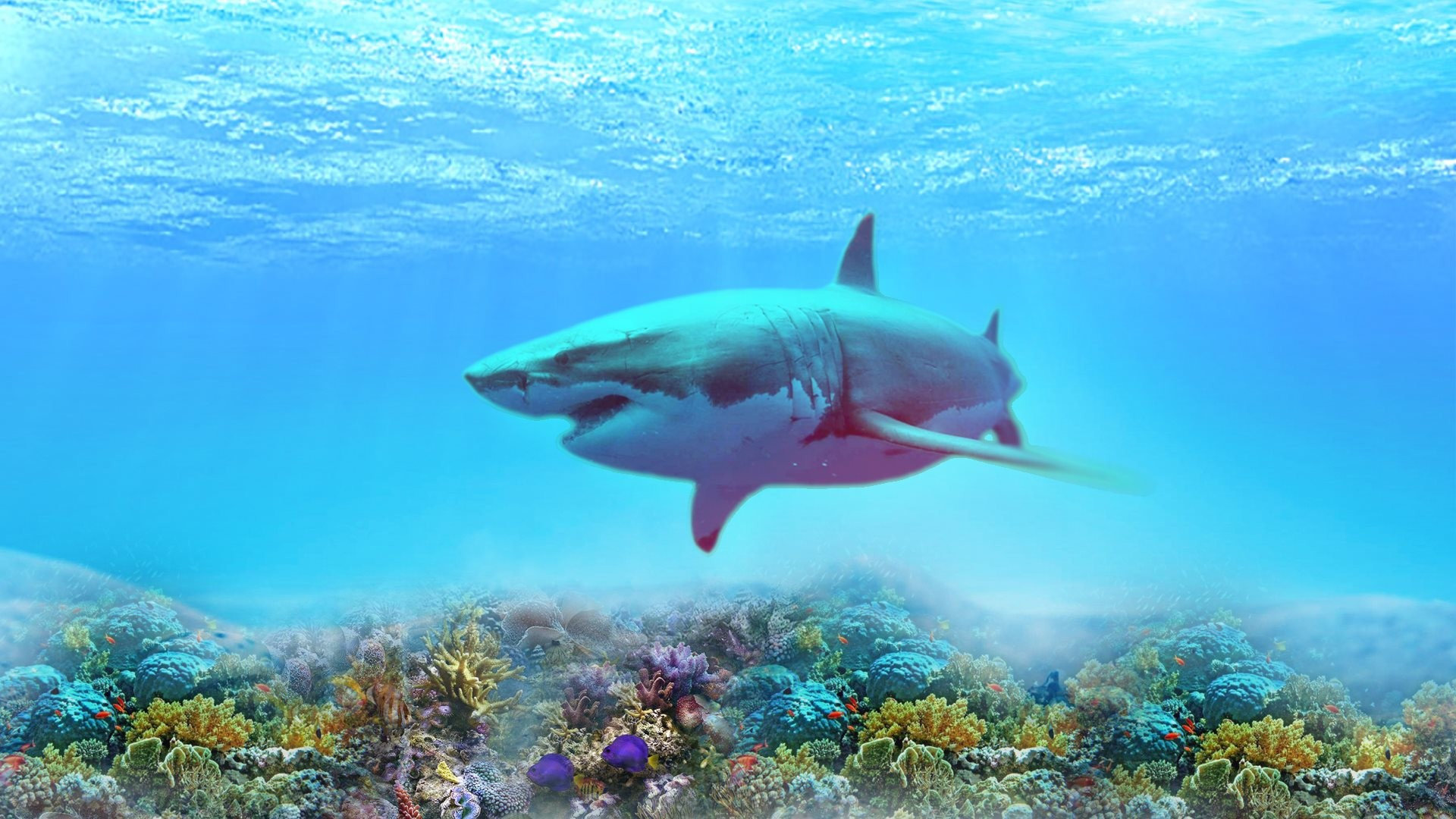 Sharks wallpapers 60 images 2560x1440 creative graphics mermaid wallpaper voltagebd Images