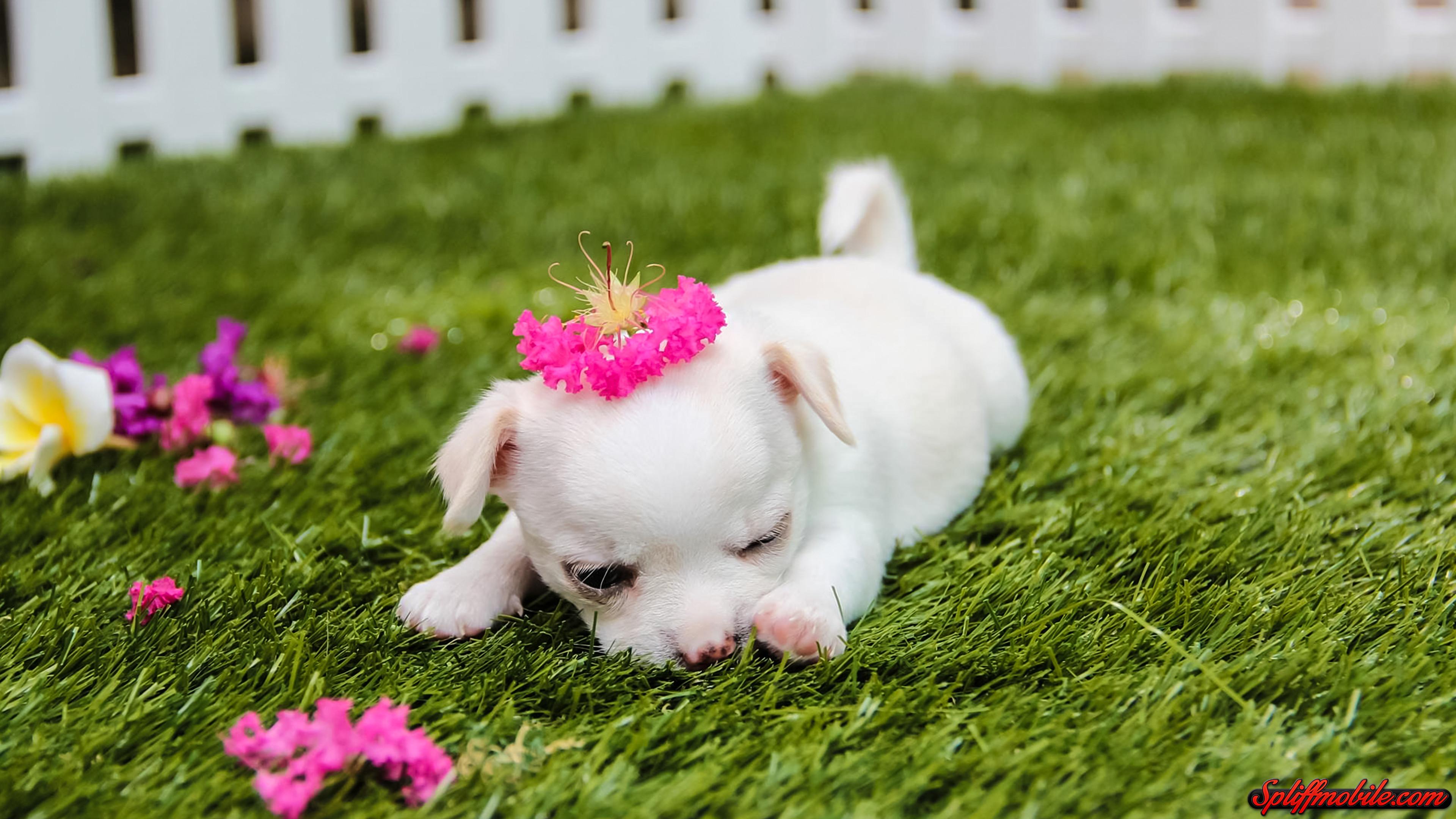 Best Puppy Wallpaper on HipWallpaper Cute Puppy Wallpaper