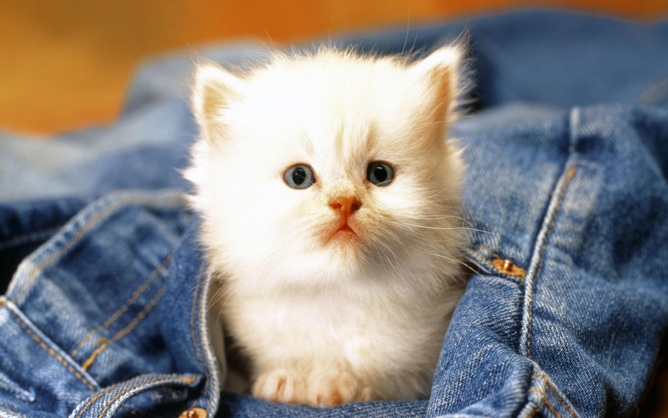 2560x1600 ... Wallpaper Of Cute Cats And Kittens Cute Cats Wallpapers – Wallpaper ...