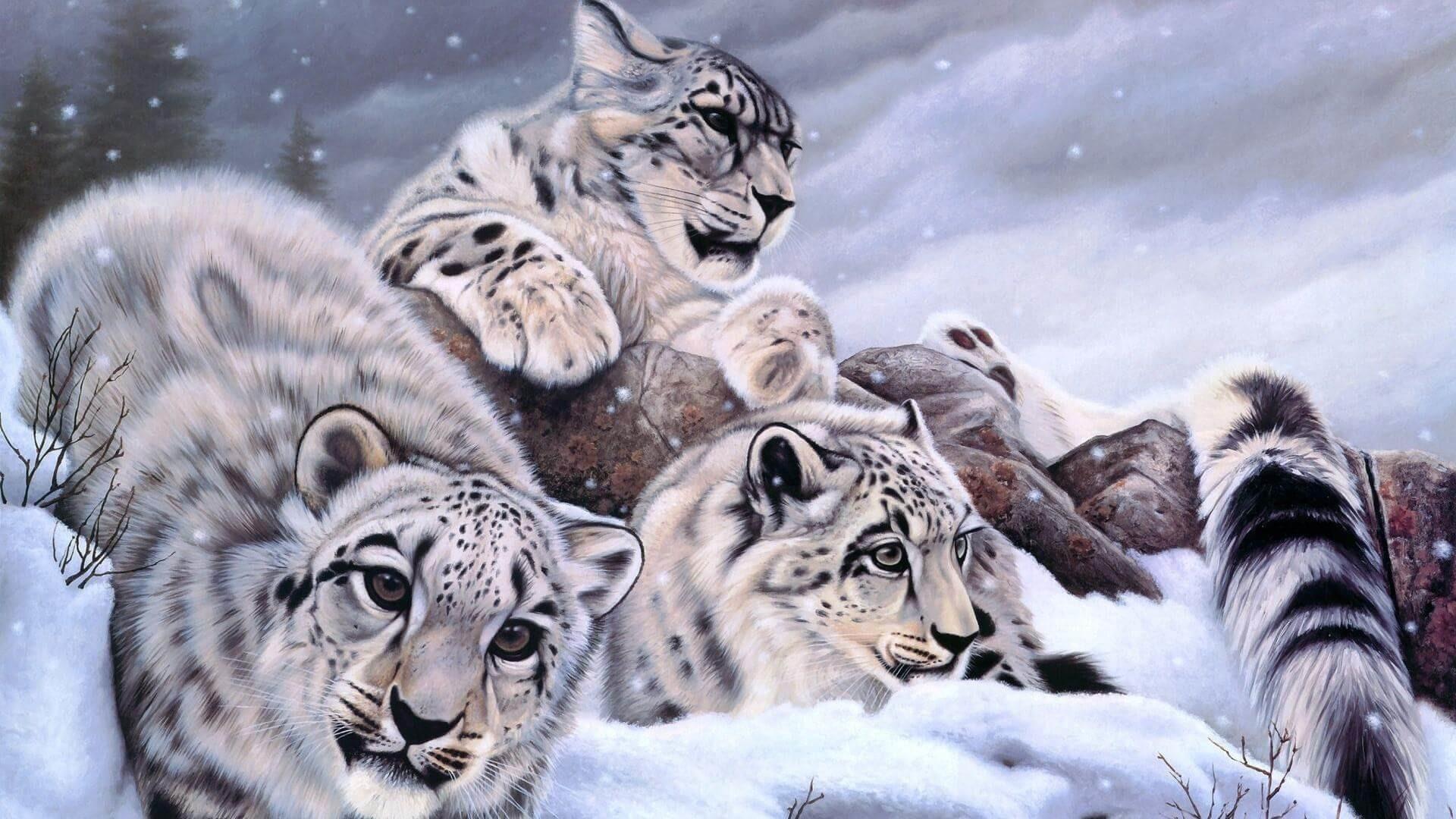 mac os x snow leopard wallpaper hd 60 images