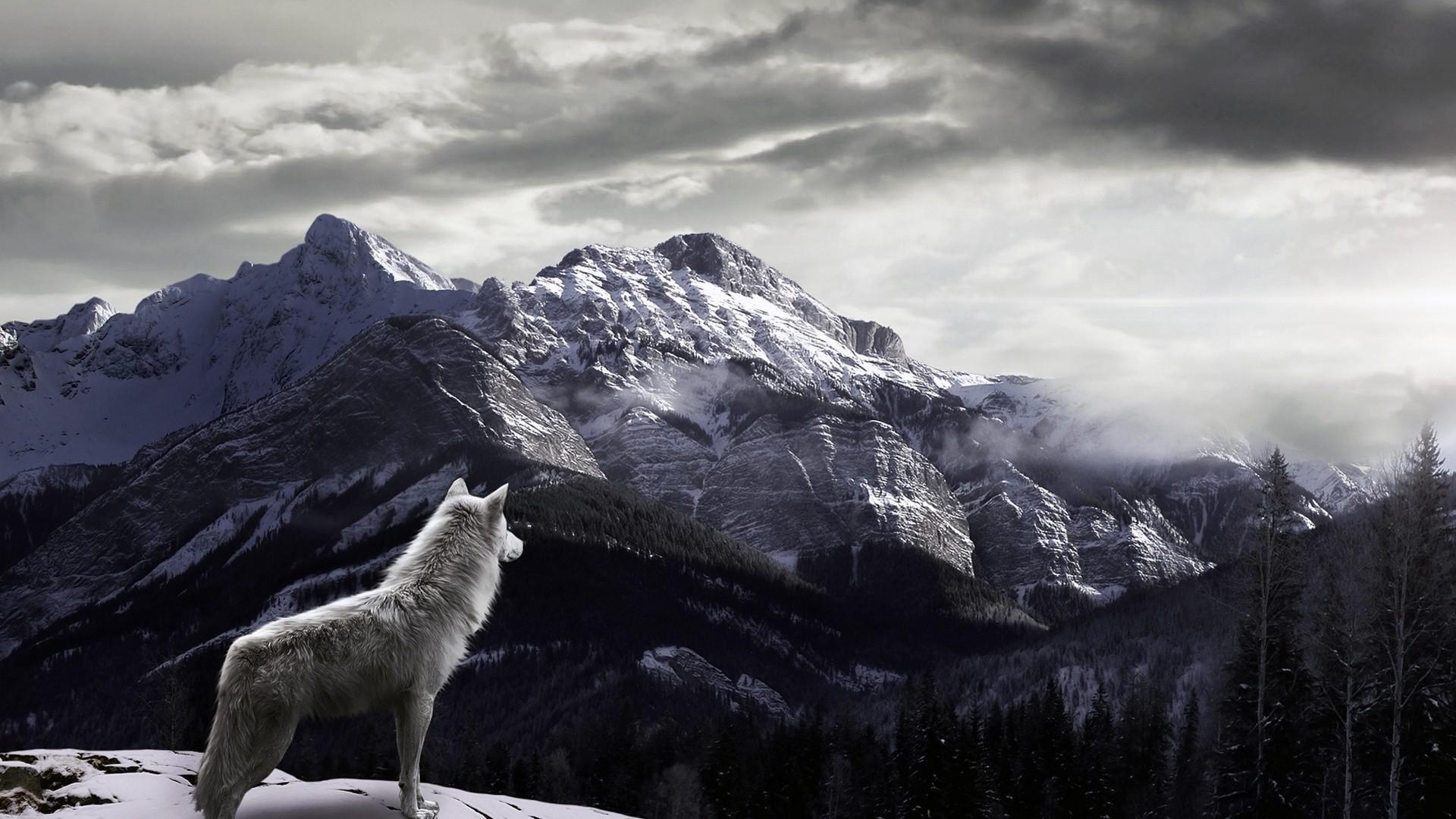 4k wolf wallpaper 43 images - 1920x1080 wallpaper 4k ...