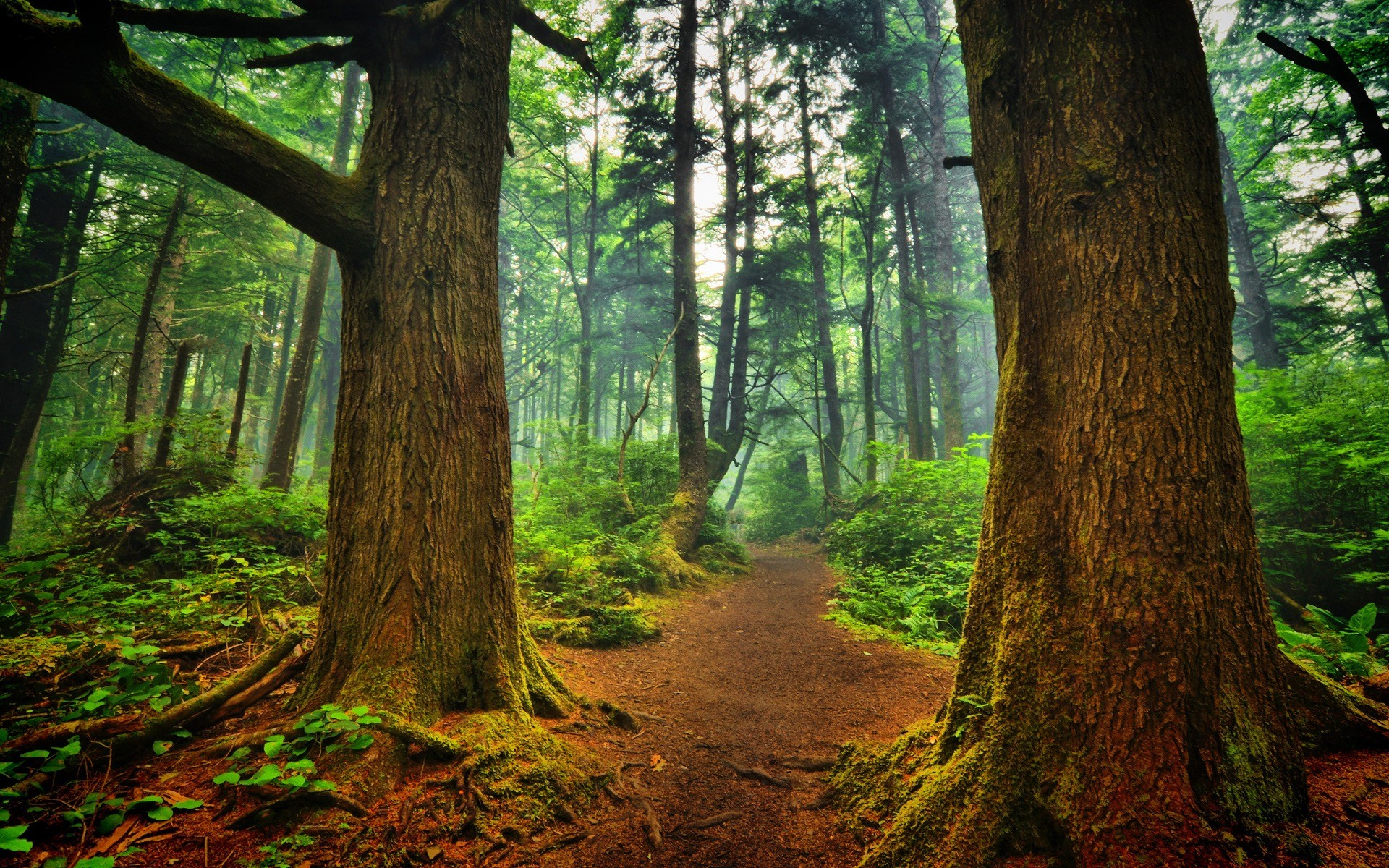 1920x1200 La Push forest Wallpaper Landscape Nature