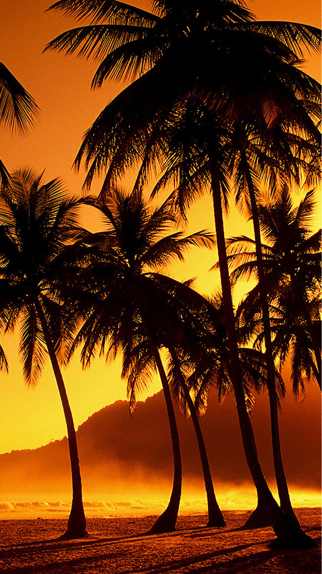 Palm Tree Sunset Wallpaper (70+ images)