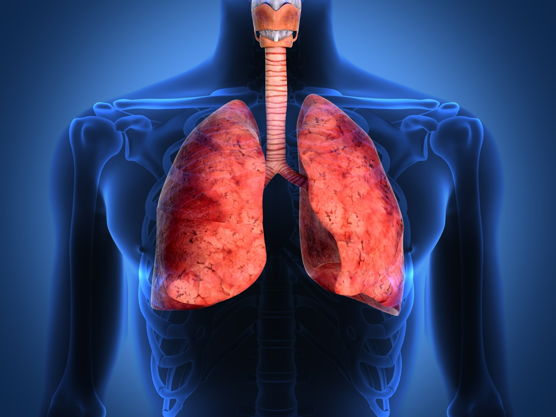 1920x1440 lungs human body respiratory tract
