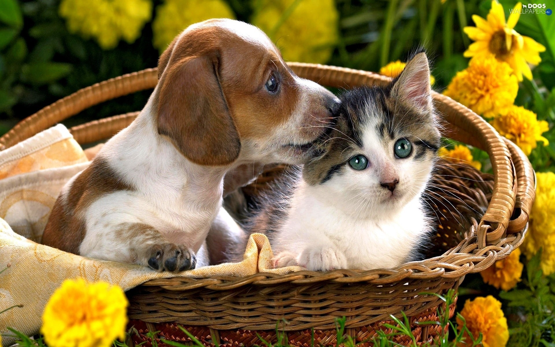 Cat And Dog Wallpaper  56  Images