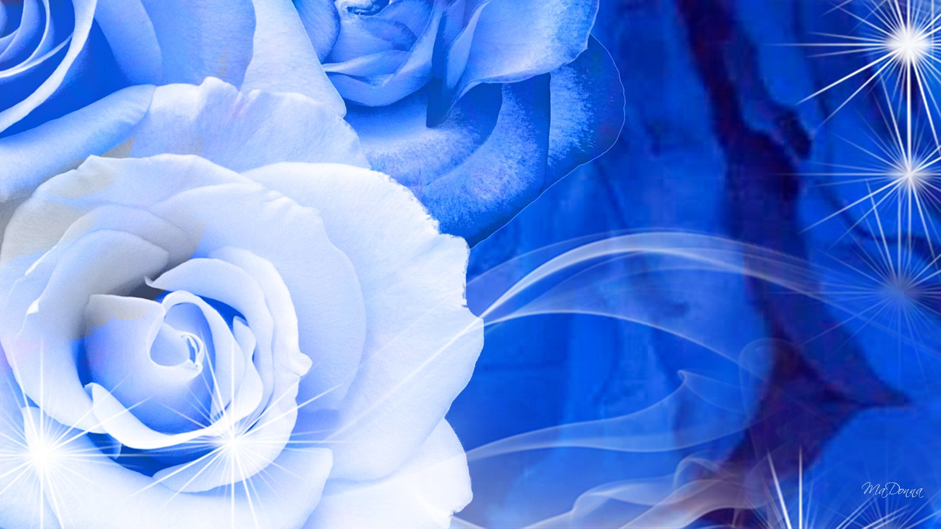 White And Blue Roses Images