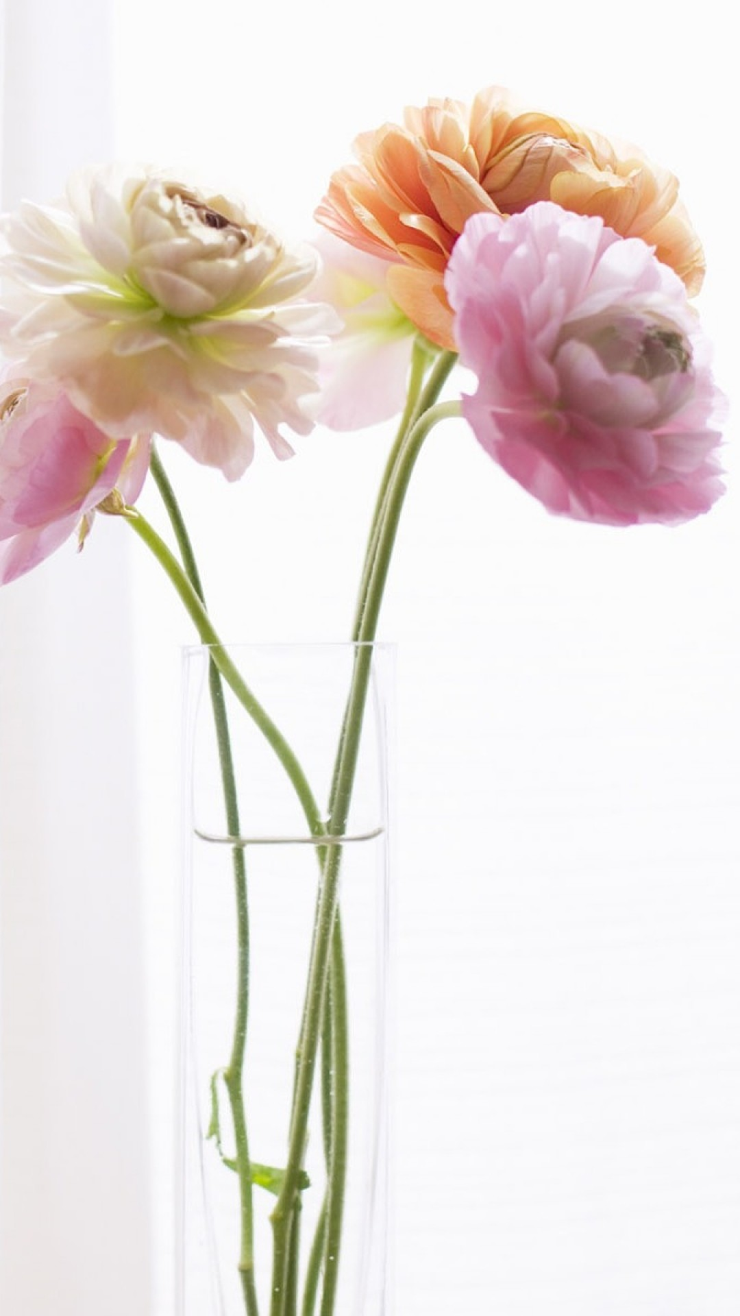 1080x1920 Preview wallpaper peonies, flowers, vase, curtains