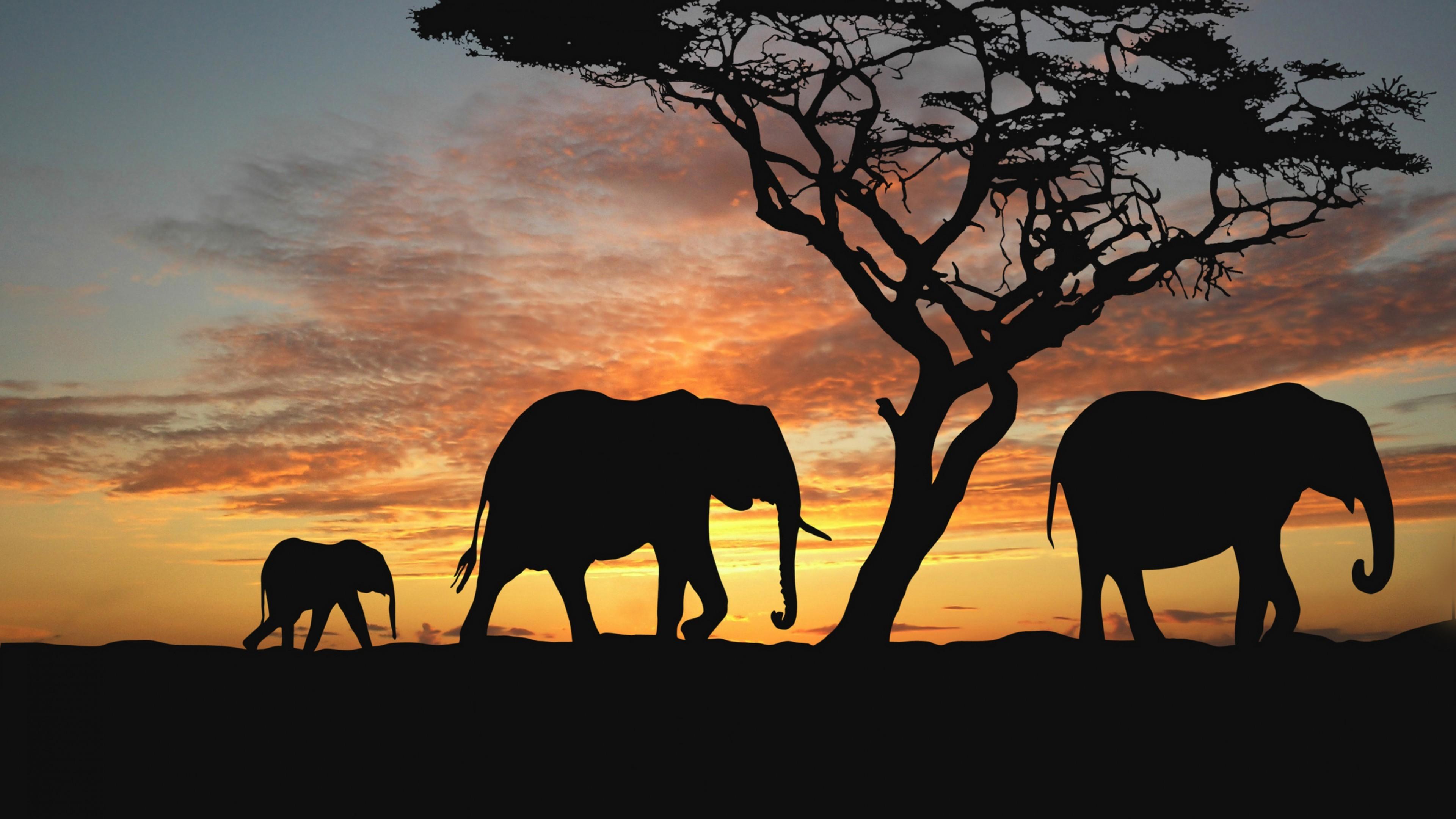 1920x1200 Wallpaperwiki Elephant Animal Wallpaper PIC WPD007135