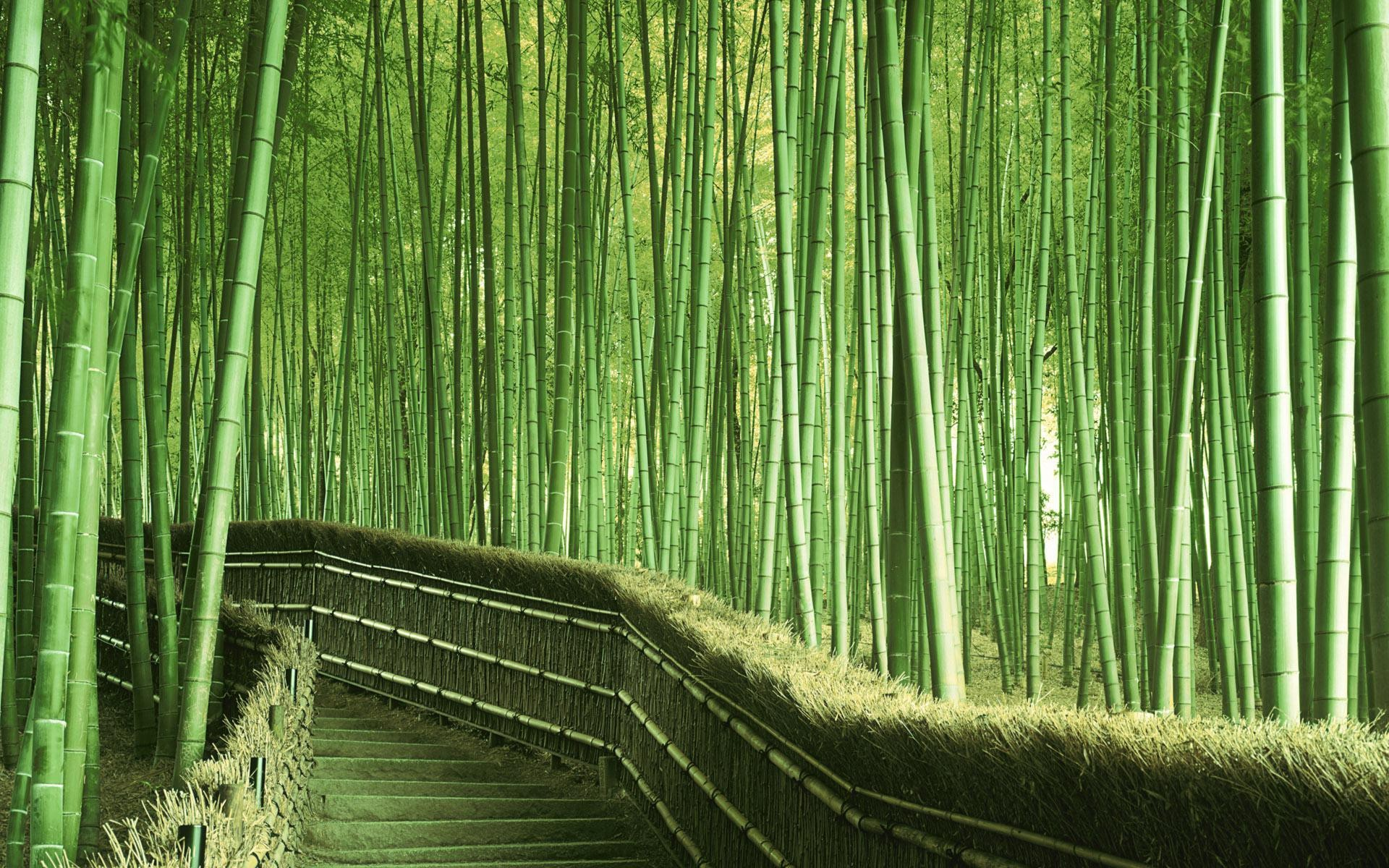 1920x1200 HD Bamboo High Quality Wide Desktop Wallpaper For Background Free
