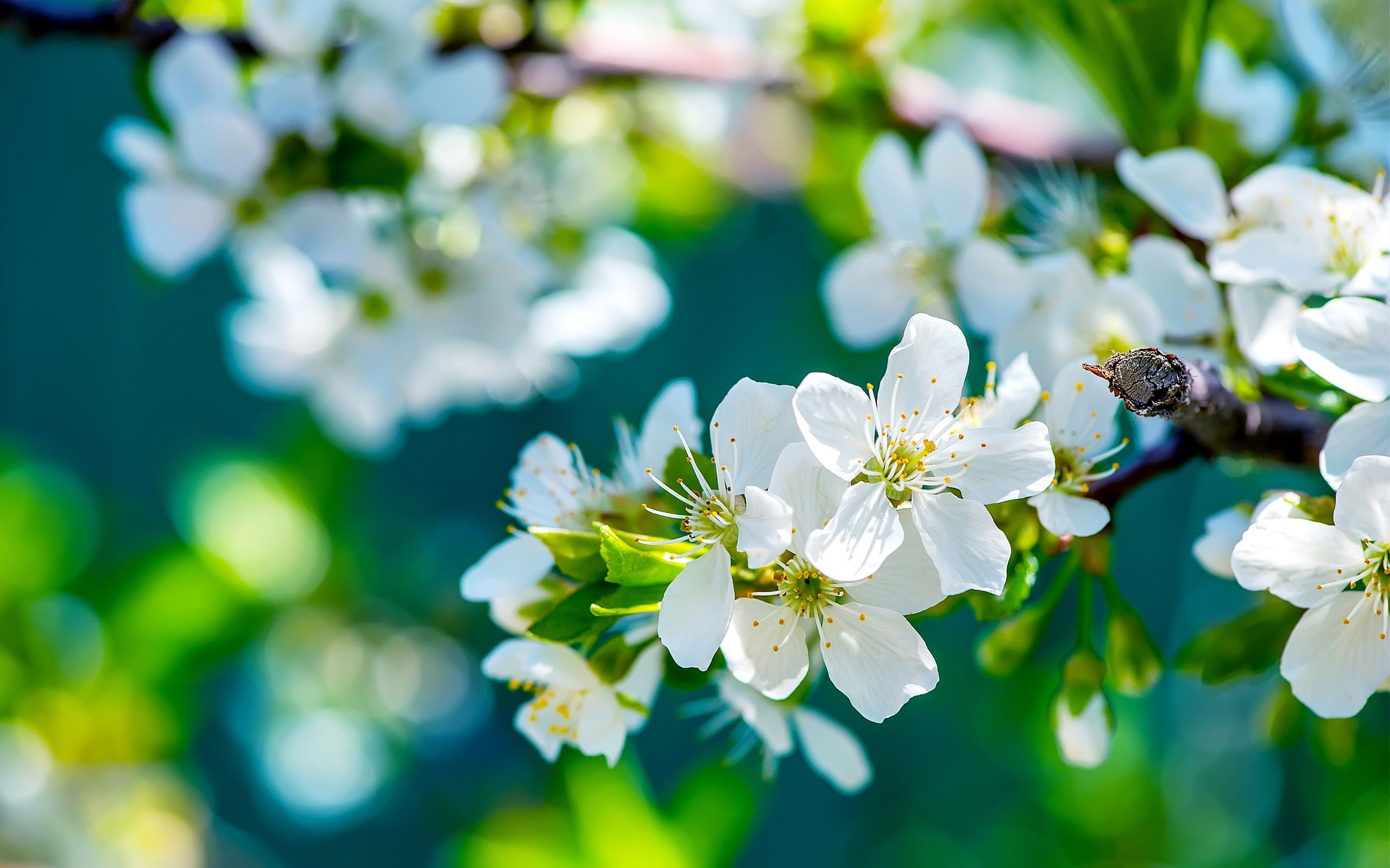 4k Flower Wallpapers 52 Images