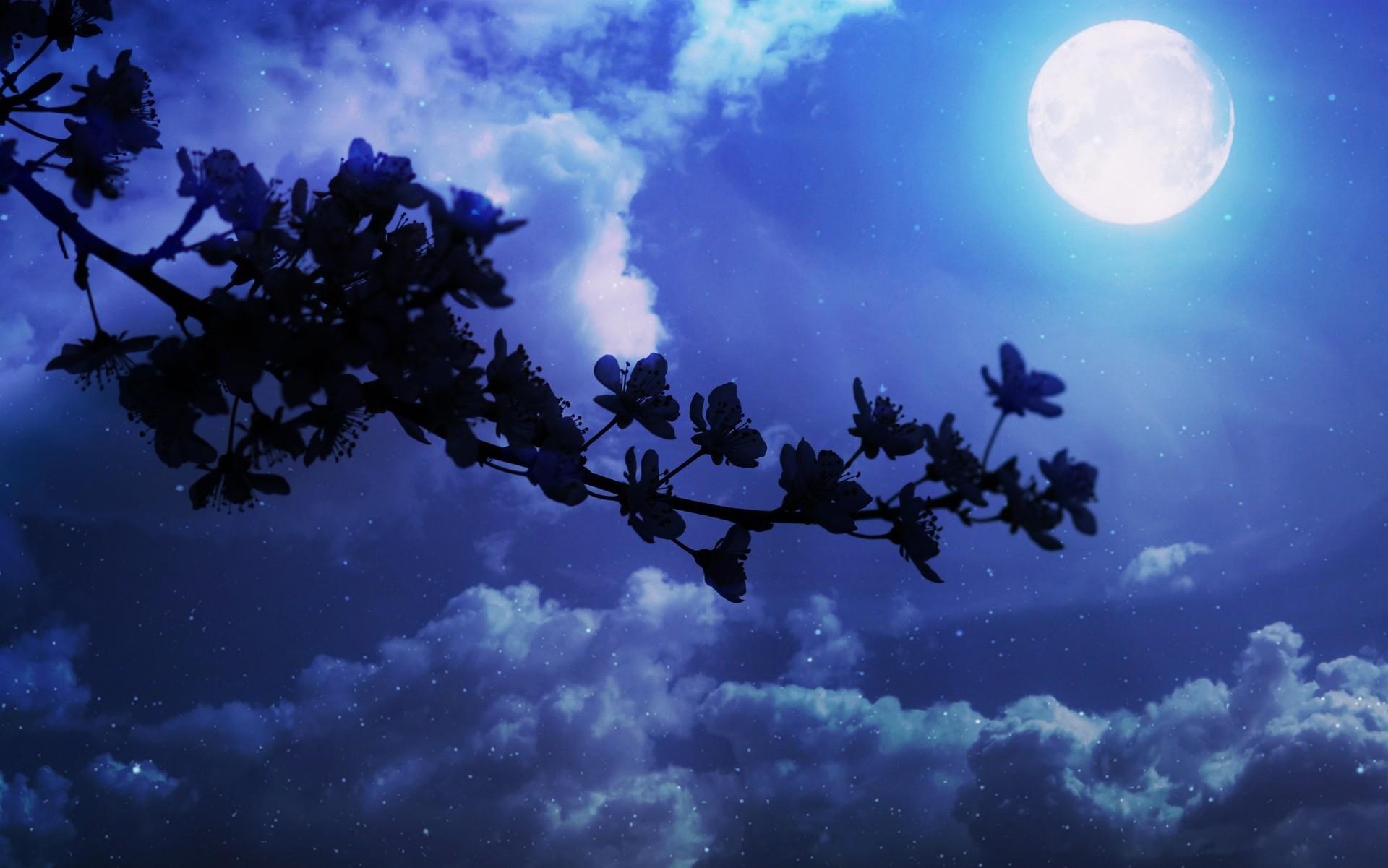 Simple Wallpaper Night Cherry Blossom - 822108-free-moonlight-night-wallpaper-1920x1201  2018.jpg