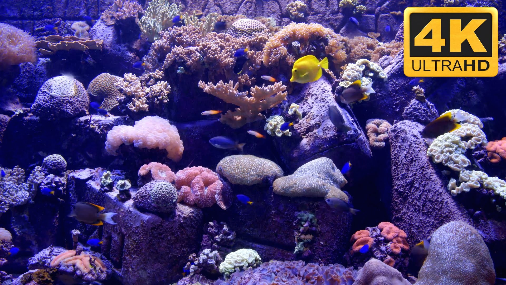 1920x1080 Full Size of Fish Tank 4kum Screensaver And Tv Wallpaper Youtube  Maxresdefault Crawler Free Downloadaquarium Download ...