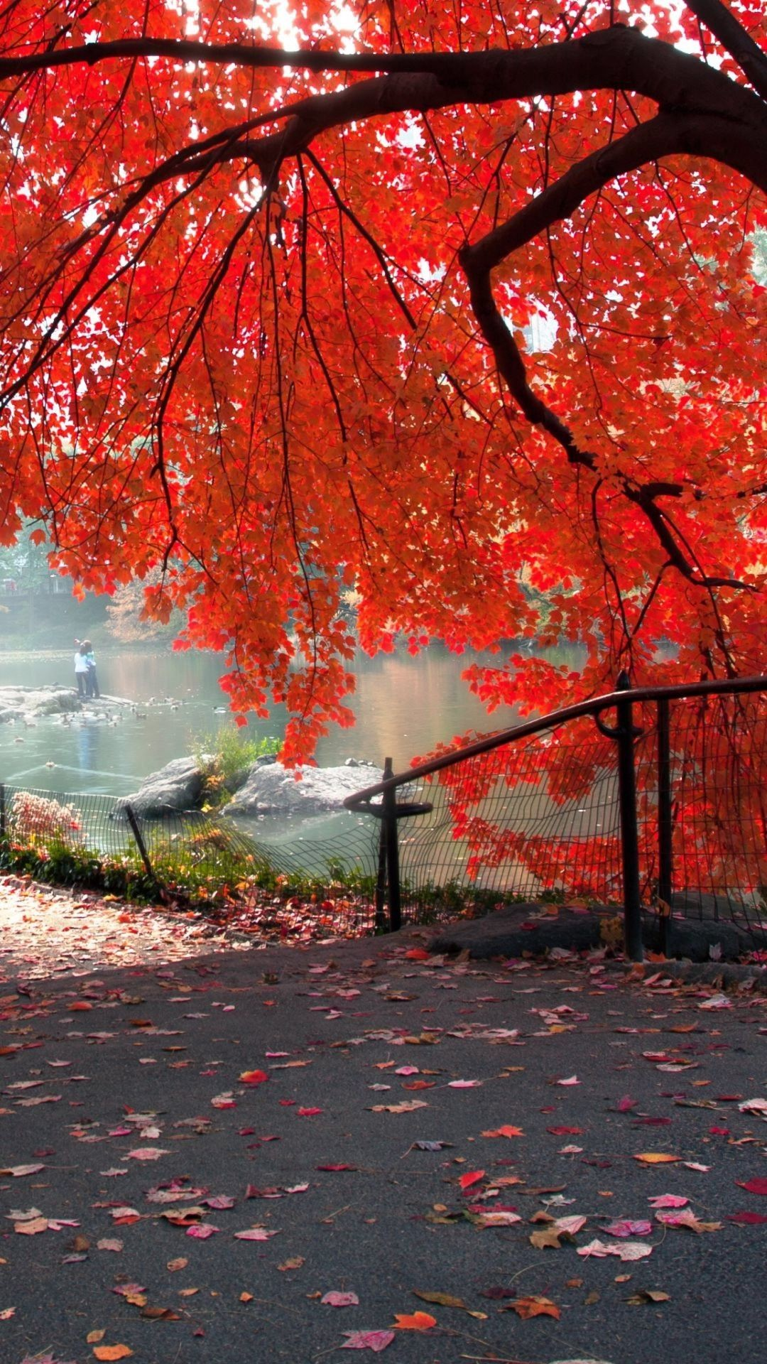 1080x1920 Park bench in autumn Wallpaper Wide Wallpaper Collections