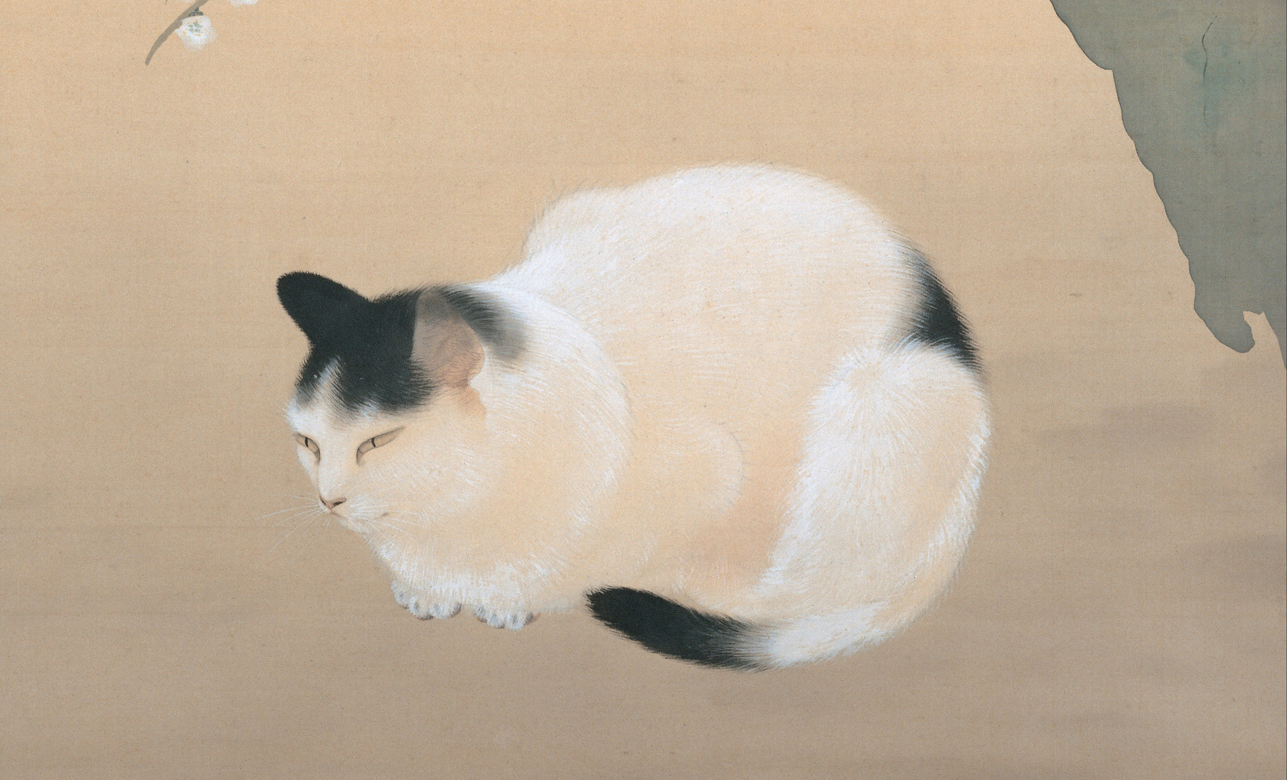 2560x1551 painting of black and white cat