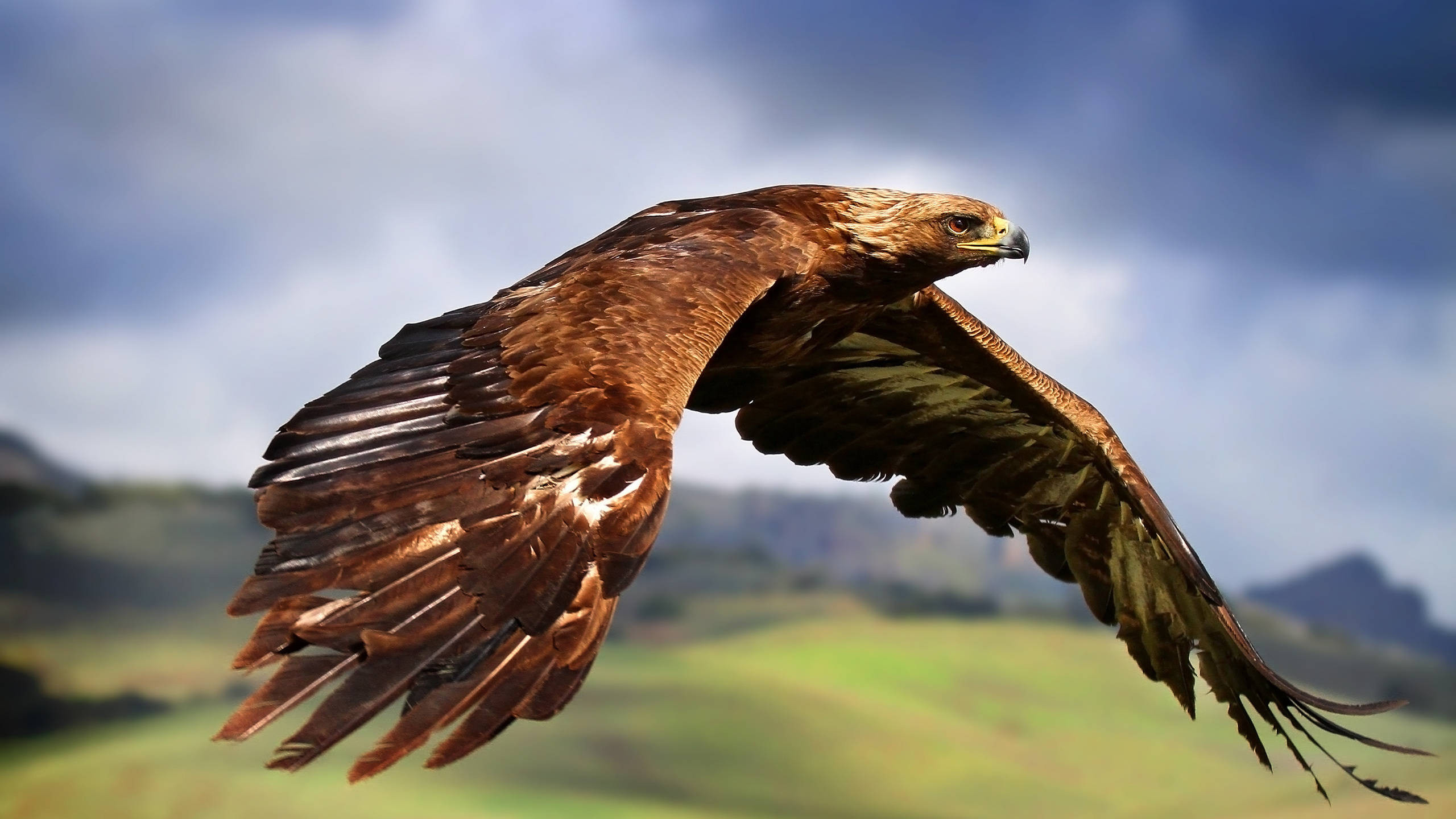 2560x1440 Wallpaper Eagle in Fight [1920x1080] | High Quality Wallpapers | Pinterest  | Bald eagles