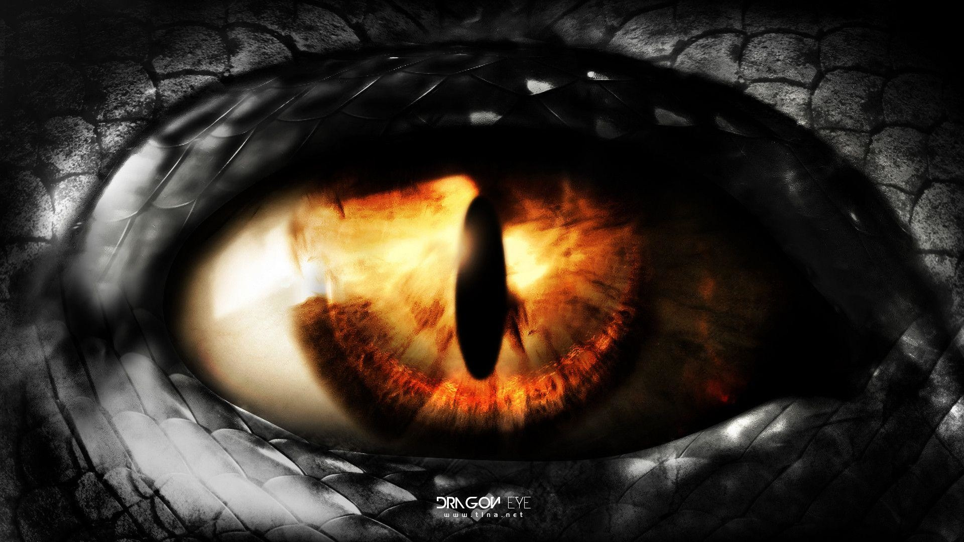Dragon Eye Wallpaper 62 Images