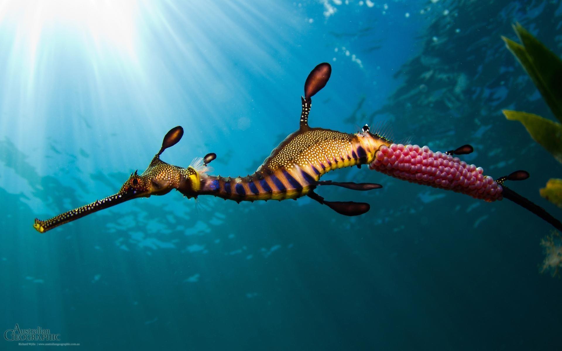 sea creatures wallpaper 53 images
