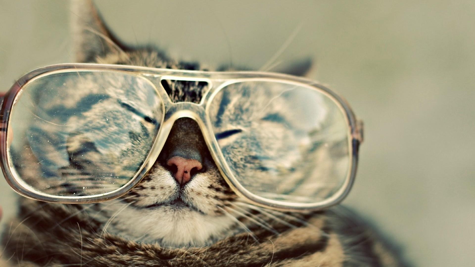 funny animal desktop wallpaper (57+ images)