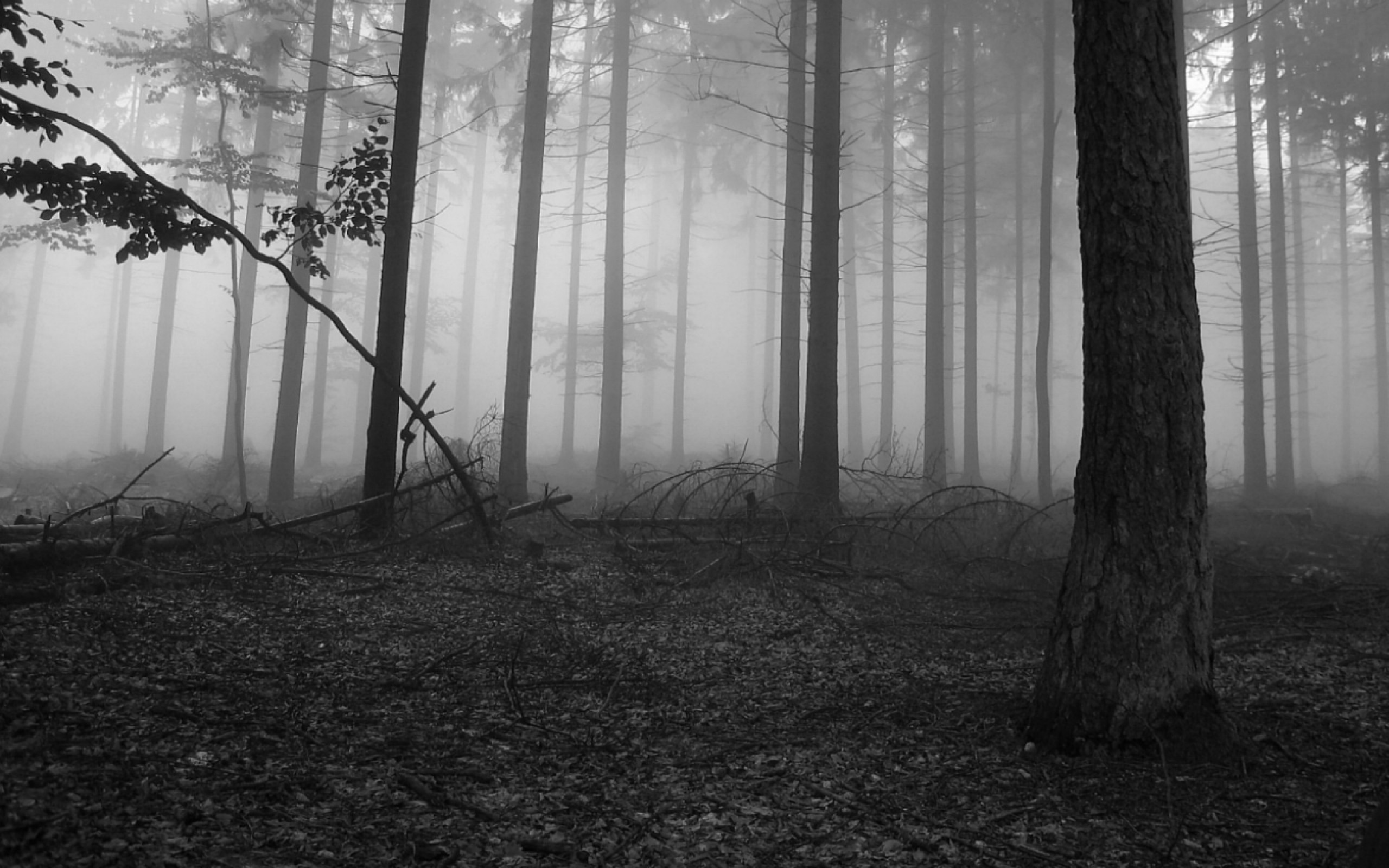 Black And White Forest Wallpaper 57 Images