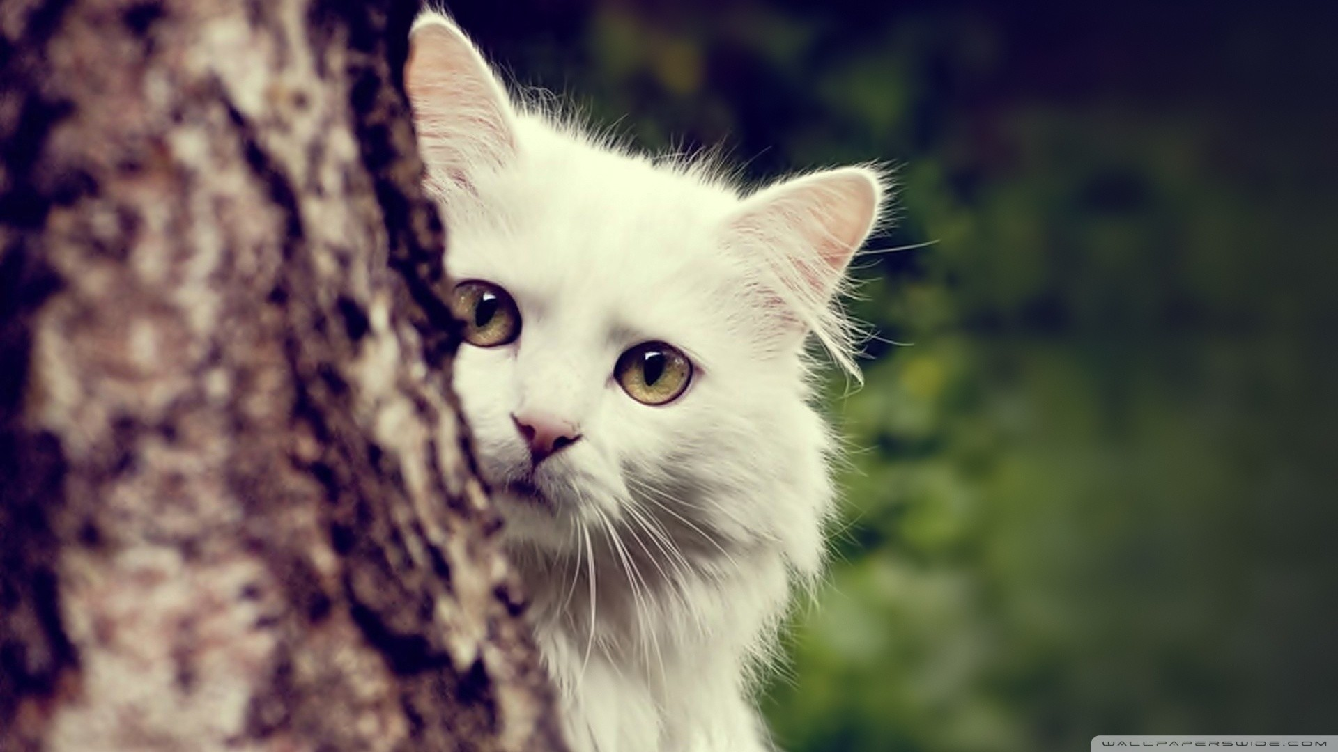 Cat HD Wallpapers 1080p (64+ images)