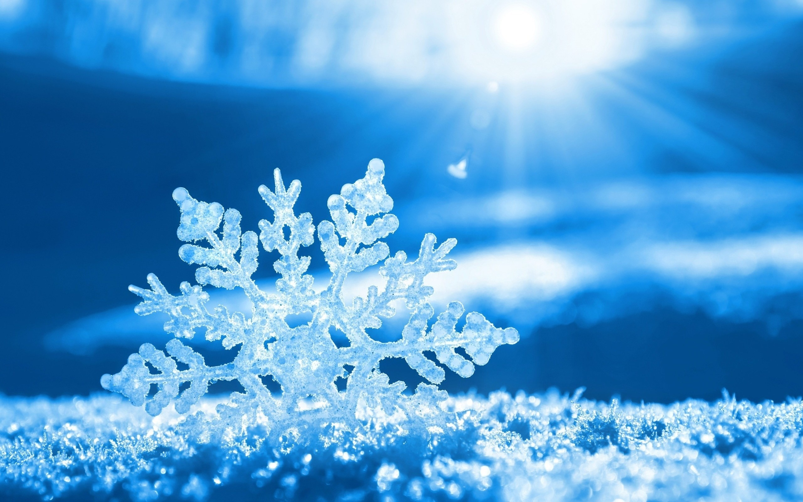 2560x1600 beautiful-snowflake-wallpaper-15536-16213-hd-wallpapers.jpg